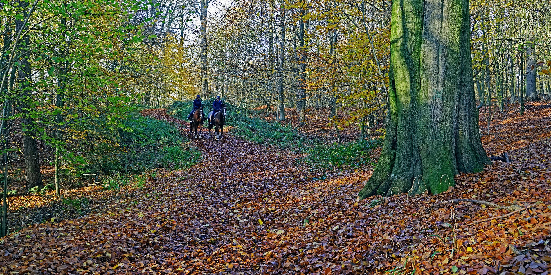 Bild mit Bäume, Herbst, Wege, Wald, Wandern, Ausspannen, reiten