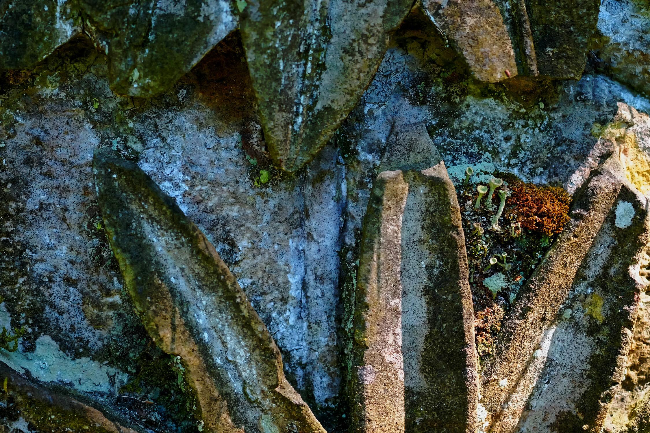 Bild mit Pflanzen, Stein, Pilze, alt, Moose, Antik, Gemäuer, Relief