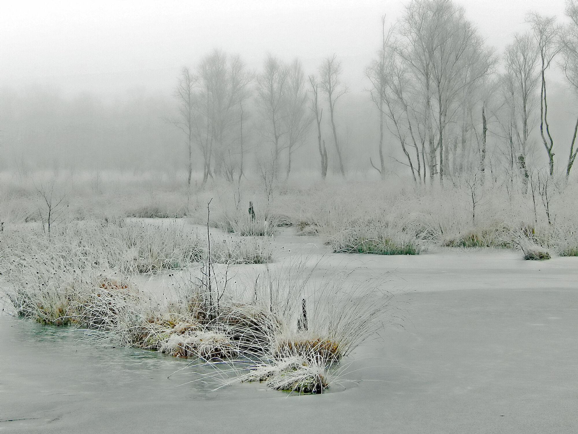 Bild mit Gräser, Bäume, Winter, Eis, Birken, Nebel, Moor, Lebensgefahr