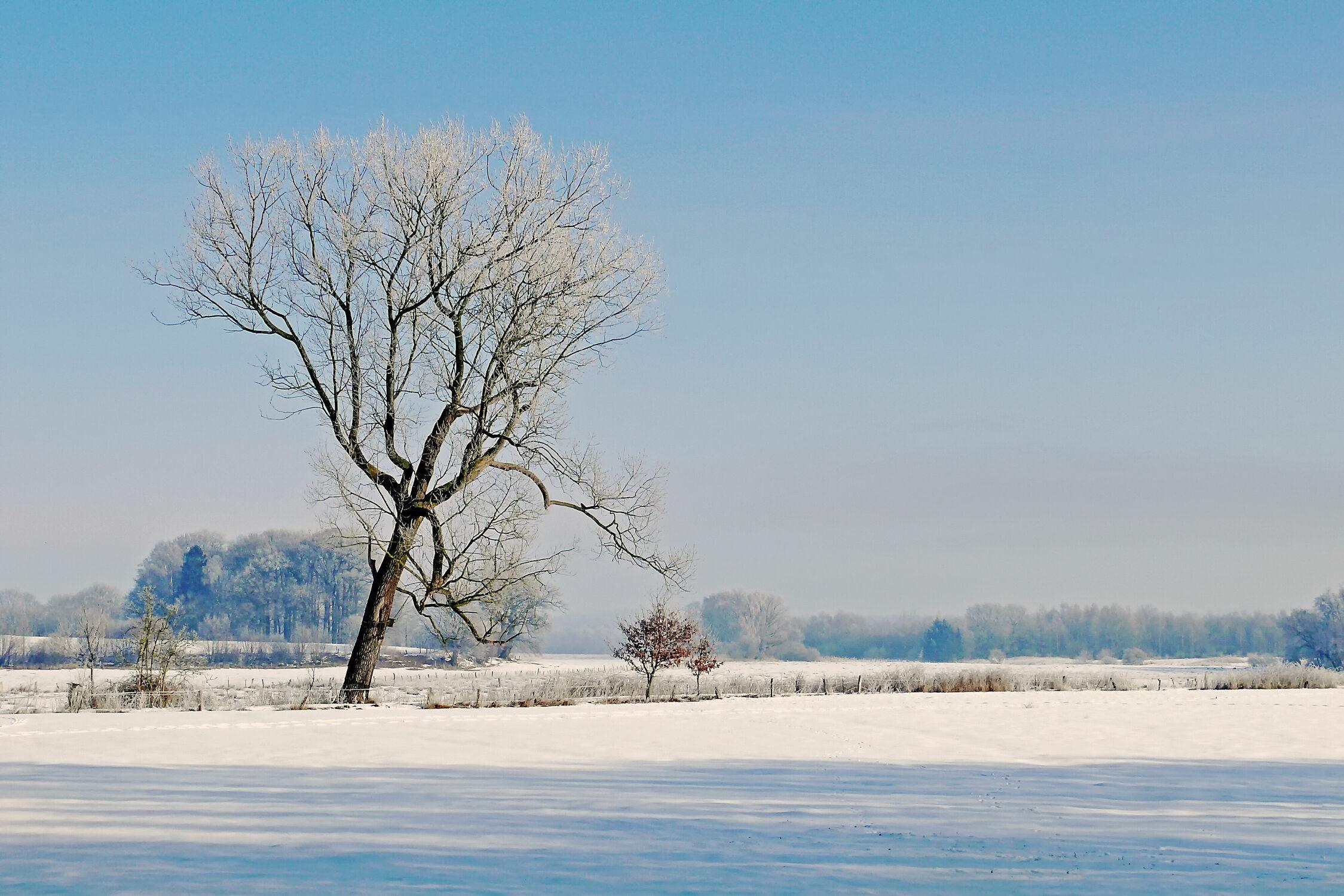 Bild mit Landschaften, Himmel, Bäume, Winter, Schnee, Blau, Felder, Winterlandschaften, Wiesen, Raureif, Dunst, Weites_Land, Prachtwinter