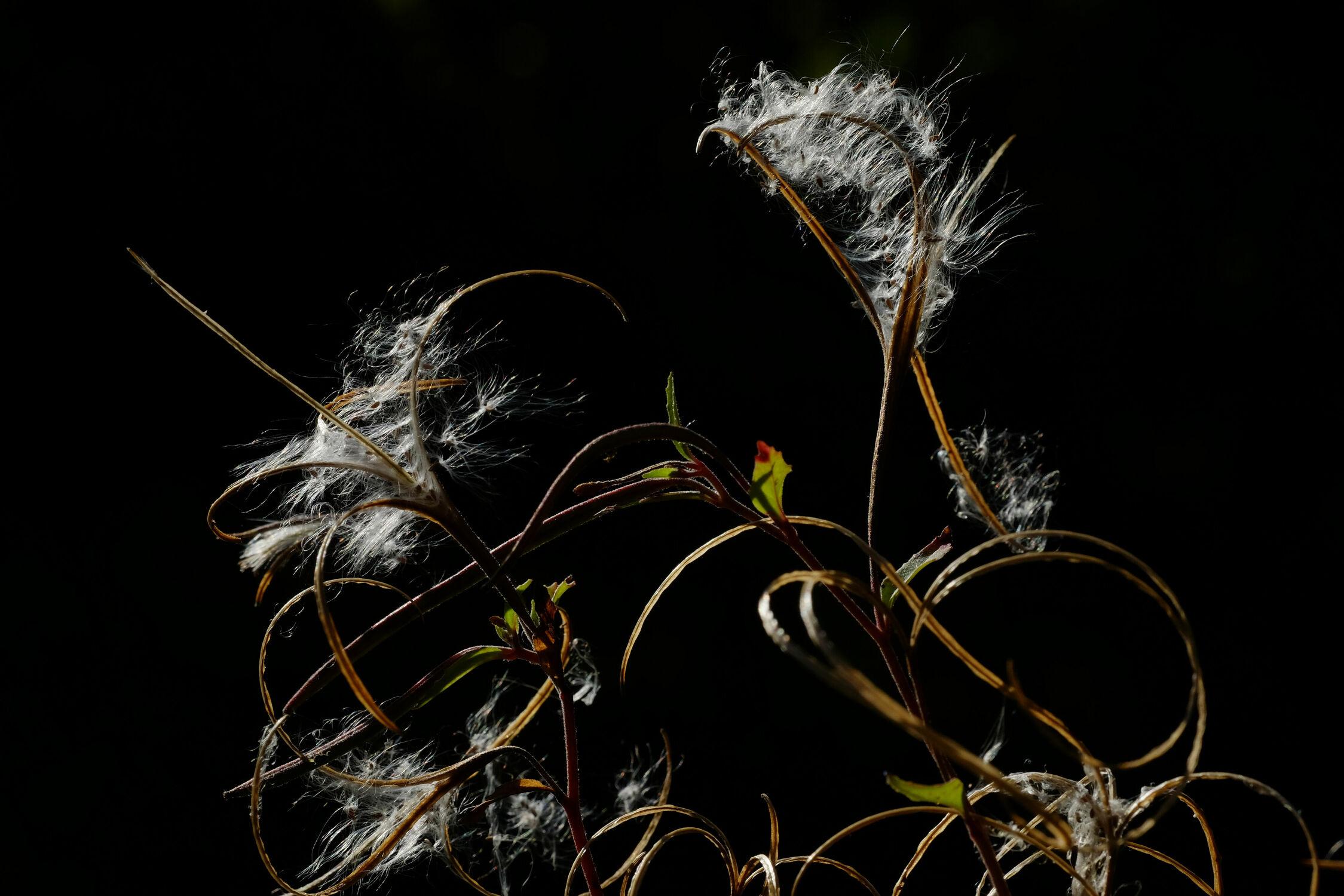 Bild mit Gräser, Makro, Pollen, Naturkünstler
