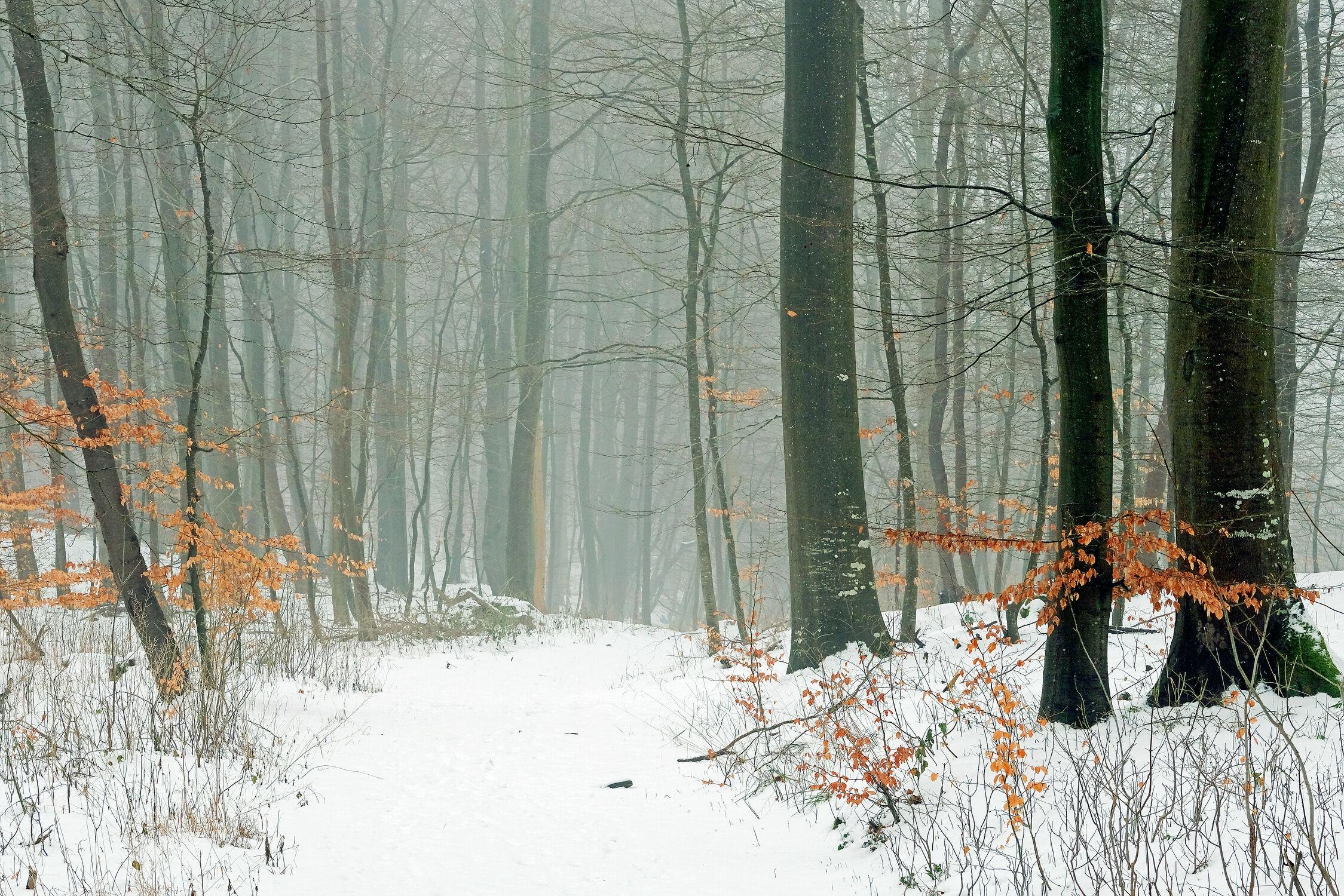 Bild mit Bäume, Winter, Schnee, Nebel, Wald, Laub, Dunst