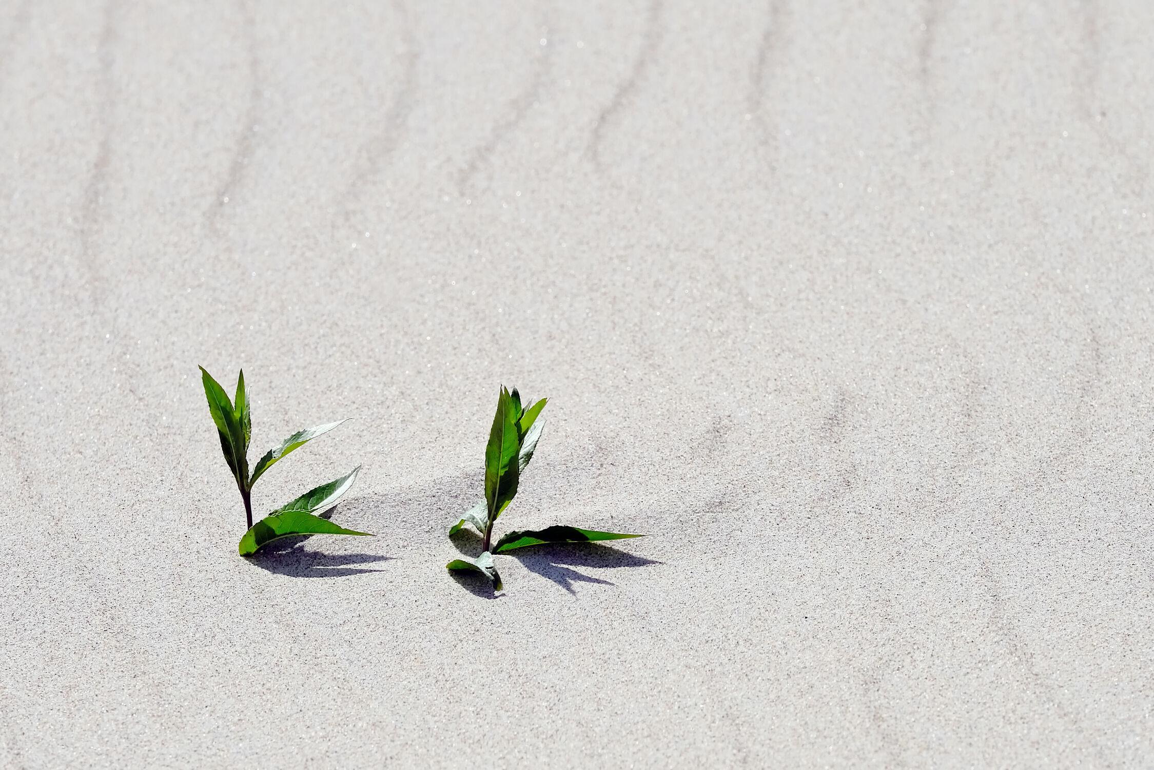 Bild mit Grün, Pflanzen, Sand, Strand