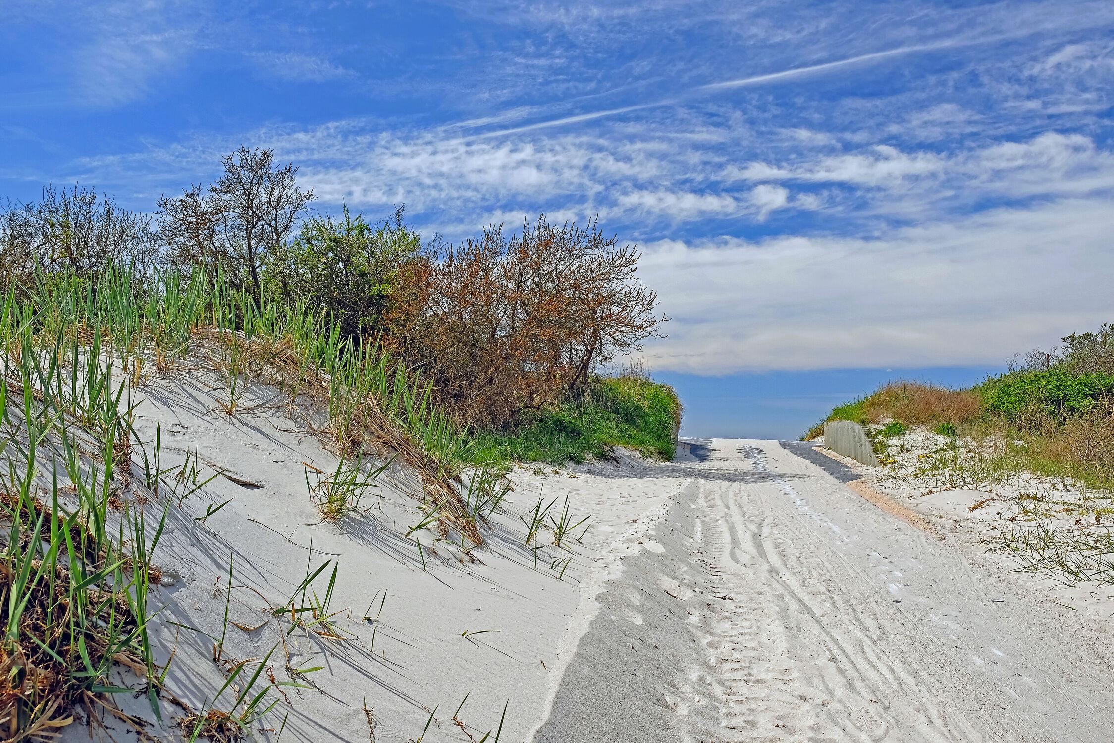 Bild mit Himmel, Bäume, Wolken, Sträucher, Strand, Weg, Dünen, Gras, Ausspannen