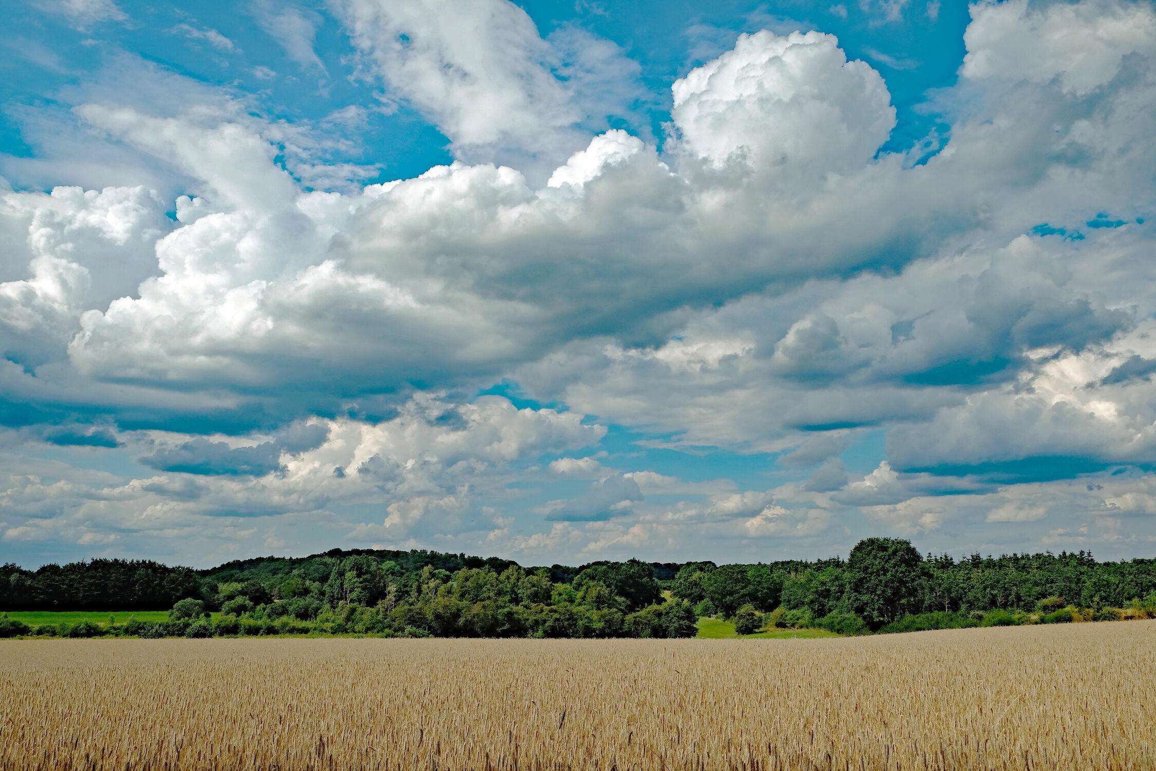 Bild mit Landschaften, Himmel, Bäume, Wolken, Kornfelder, Knicks, Schleswig, Holstein