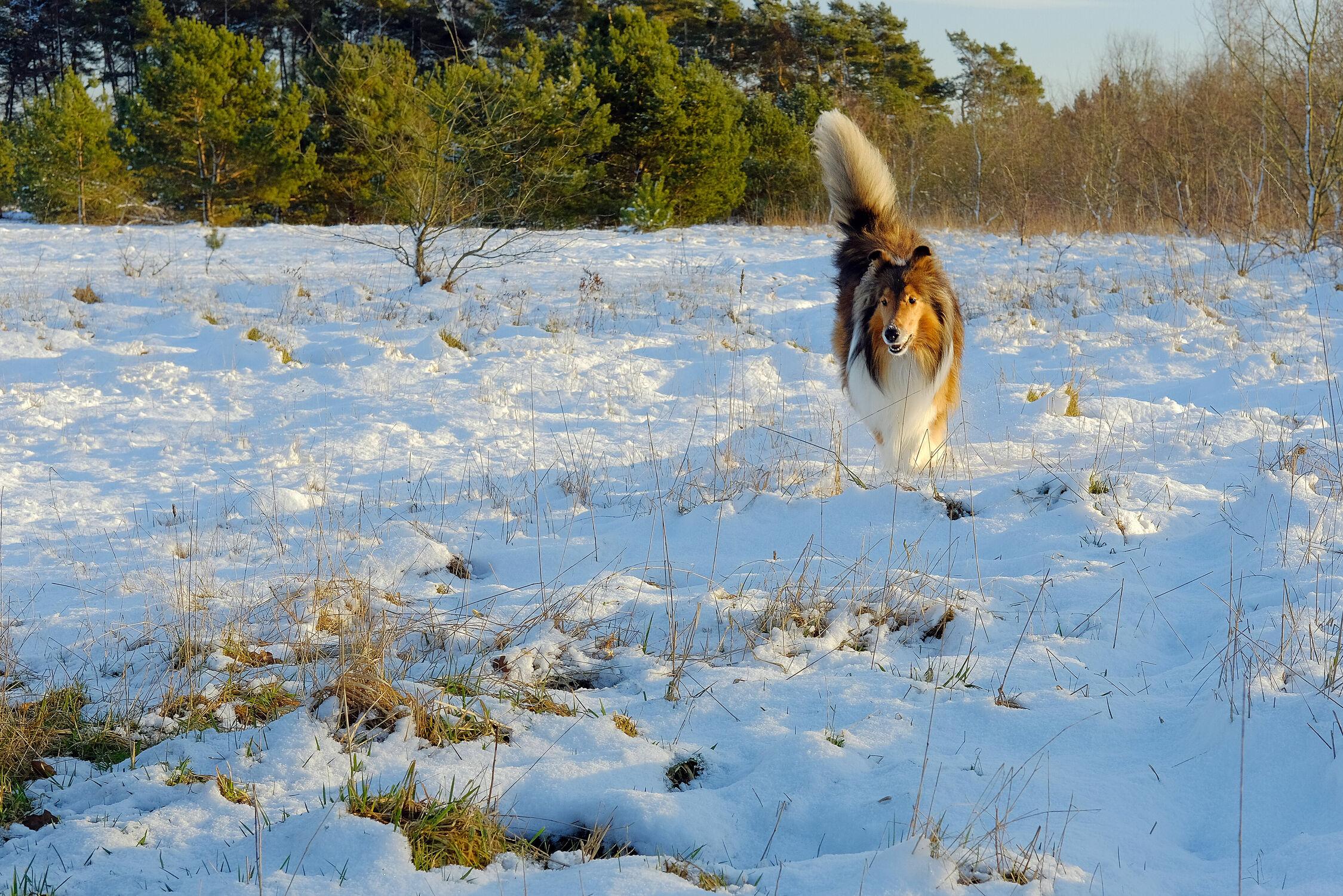 Bild mit Bäume, Winter, Schnee, Schnee, Sonne, Hund, Wildernd, Anleinpflicht, Kargland, Freilaufend