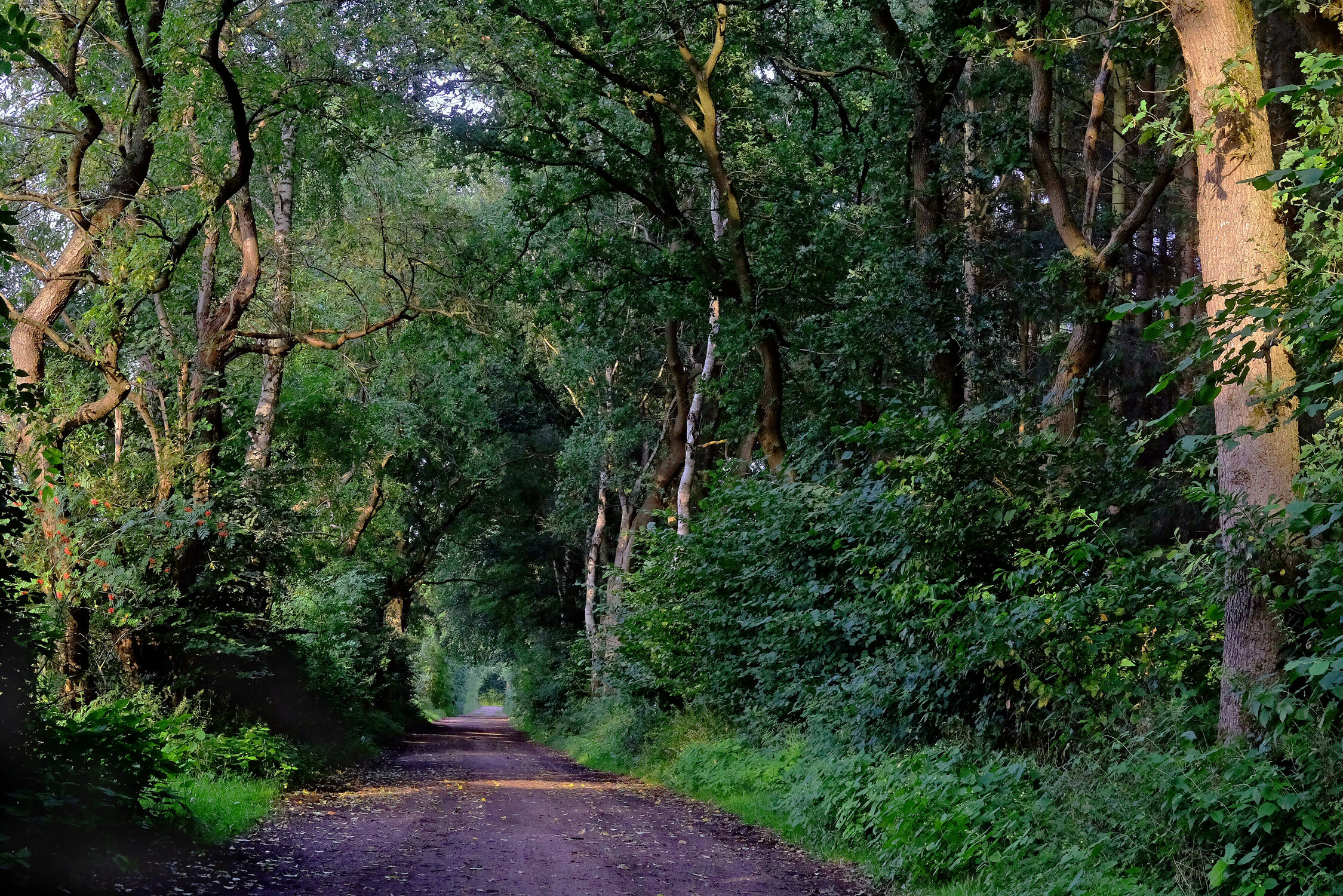 Bild mit Natur, Grün, Pflanzen, Bäume, Sommer, Wandern, Geniessen, Schatten, Sauerstoff, Kuhle