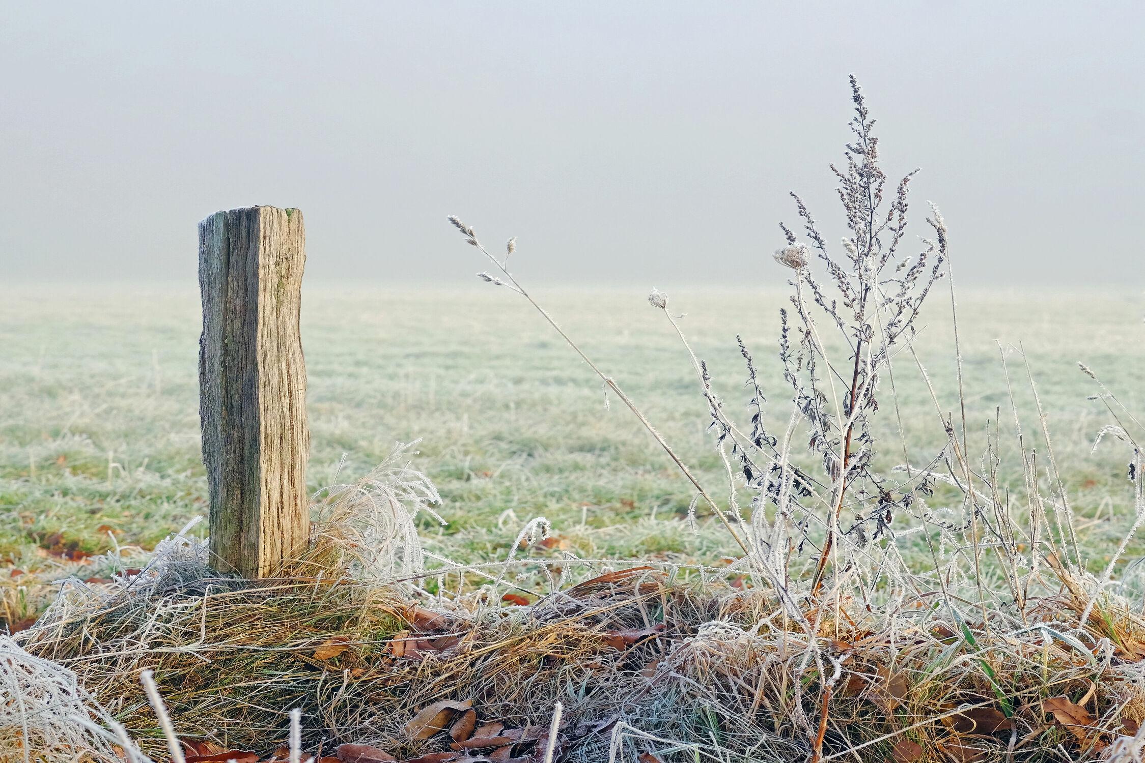 Bild mit Gräser, Sonne, Sonne, Licht, Kälte, Frost, Sonnenlicht, Ausspannen, Rauhreif, Pfahl