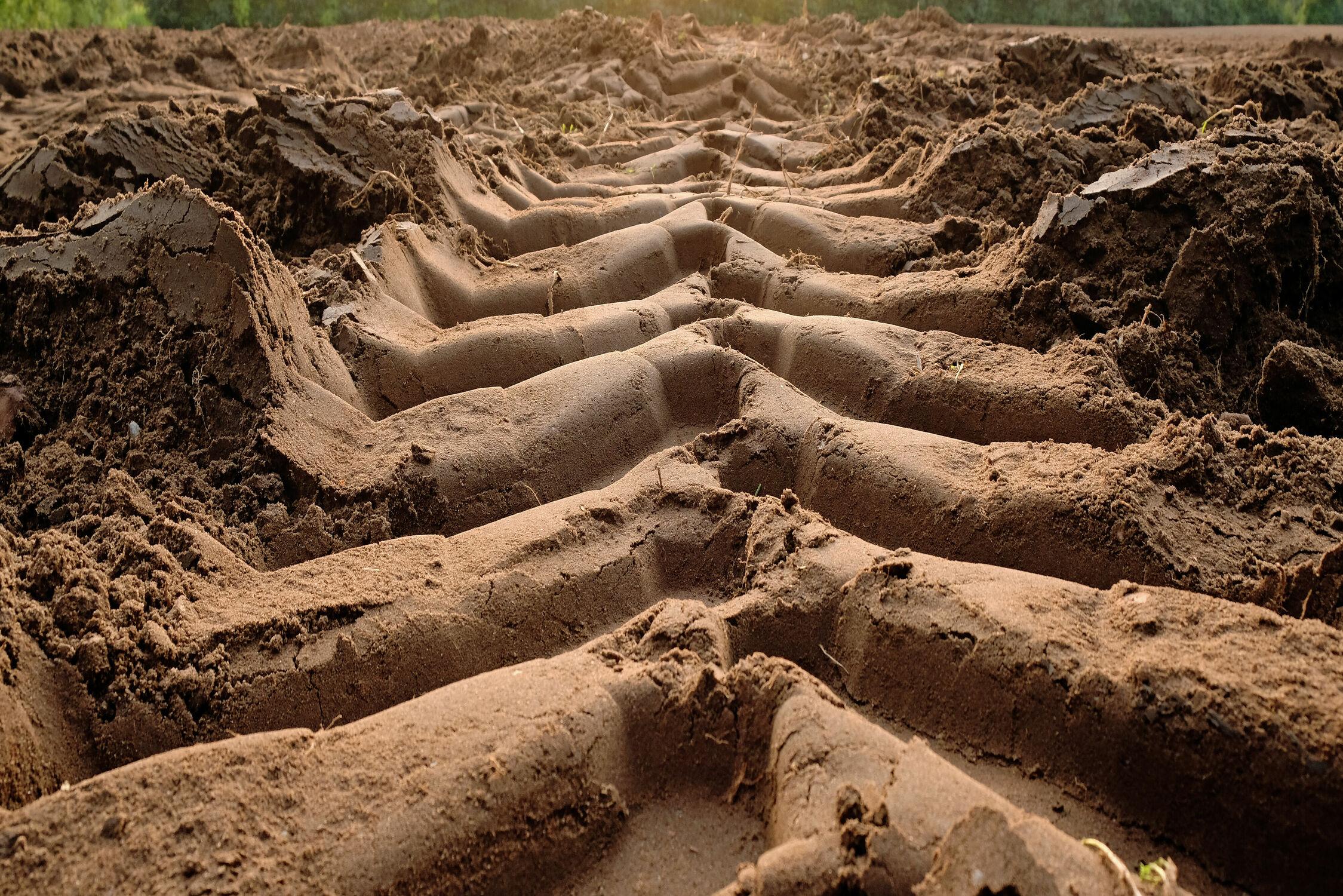Bild mit Felder, Ernte, Reifen, Spurrillen, Trecker, Boden, Aussaat