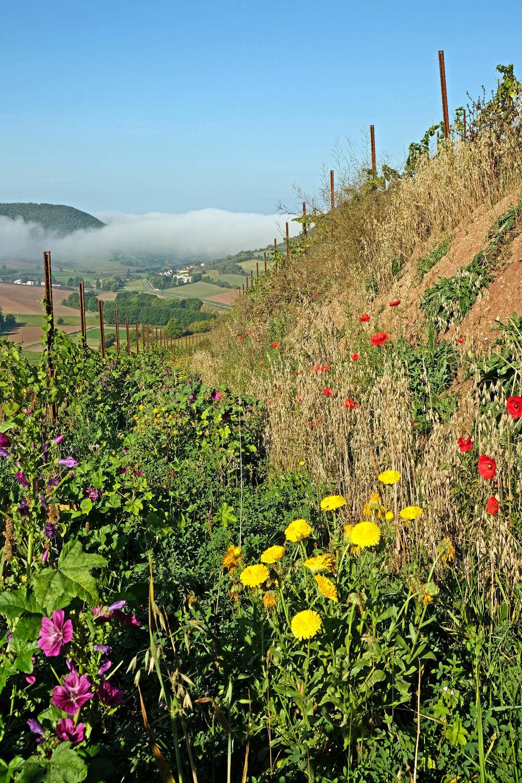 Bild mit Blumen, Weinberge, Ramsthal