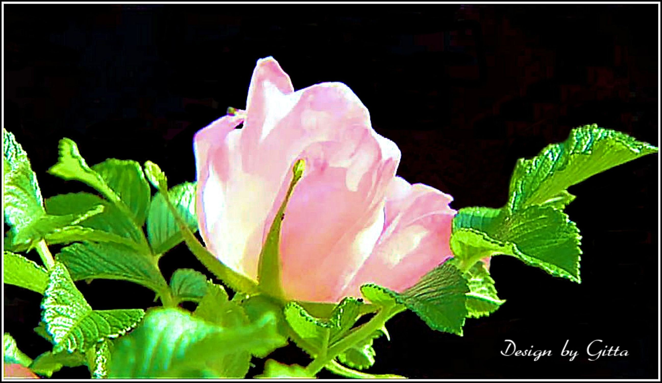 Bild mit Blumen, Rosenblüte, Blumen im Makro, Blumenmakro