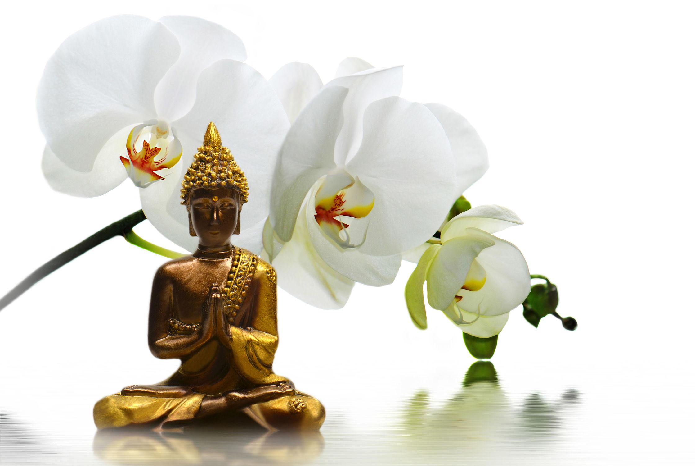 Bild mit Blumen, Steine, Blume, Orchidee, Pflanze, Meditation, Ruhe, Entspannung, Spiegelung, Buddha, Buddha, Wellness, Wellness, blüte, detail, Erholung, Deko, asien, Religion, dekorativ, Dekoration, Symbol, relax, glaube, symbolik, EXOTIC, shui