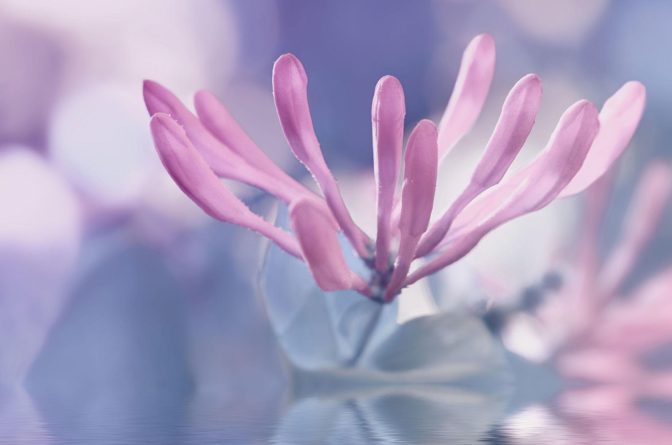 Bild mit Pflanzen, Blumen, Blumen, Frühling, Blau, Baum, Blume, Pflanze, Spiegelung, Flora, Blüten, blüte, dekorativ, blühen, baumblüte