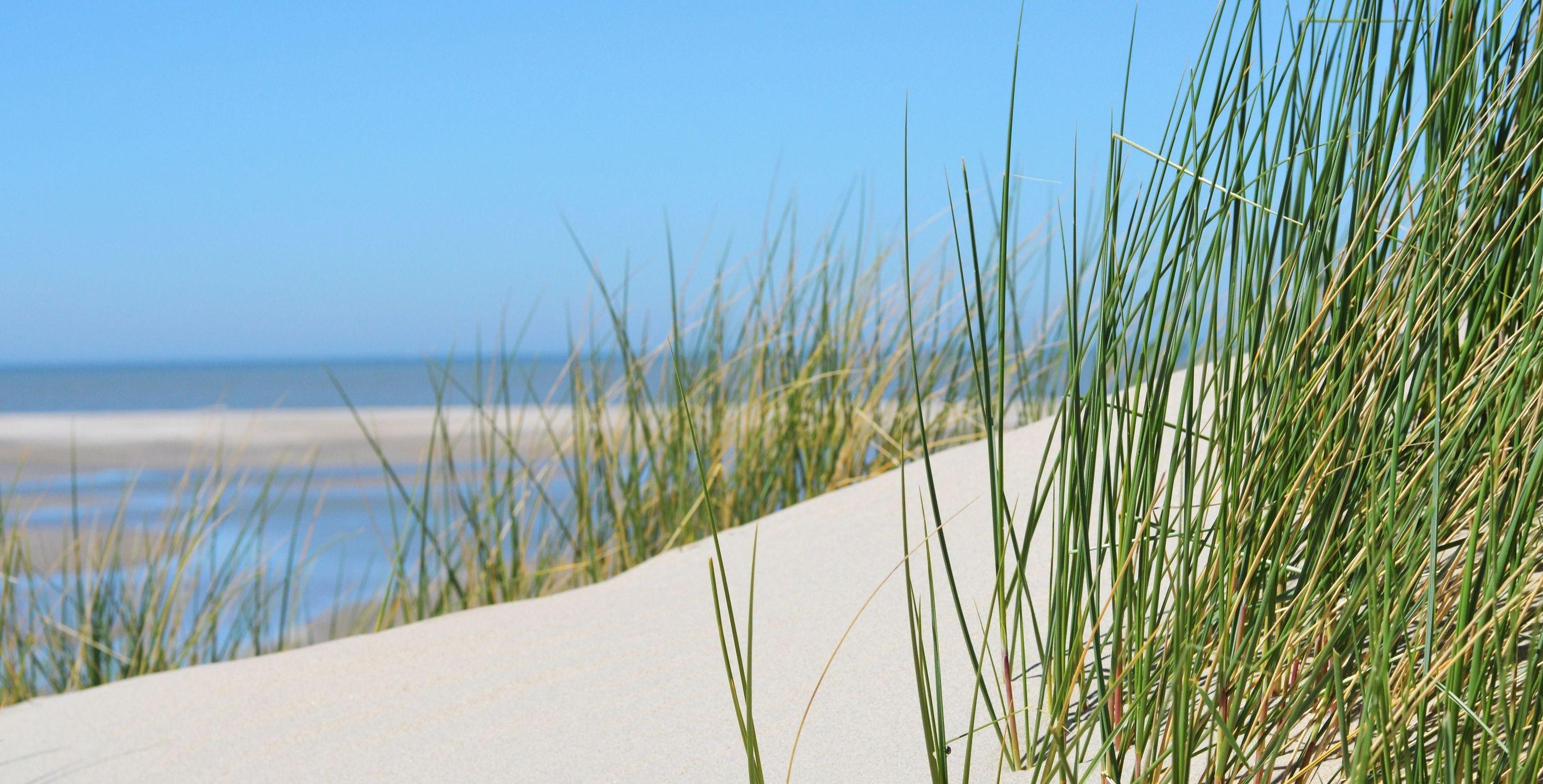 Bild mit Natur, Wasser, Landschaften, Seen, Strände, Strand, Sandstrand, Ostsee, Meer, Düne, Dünen, Dünengras, See, maritimes, Strandhafer