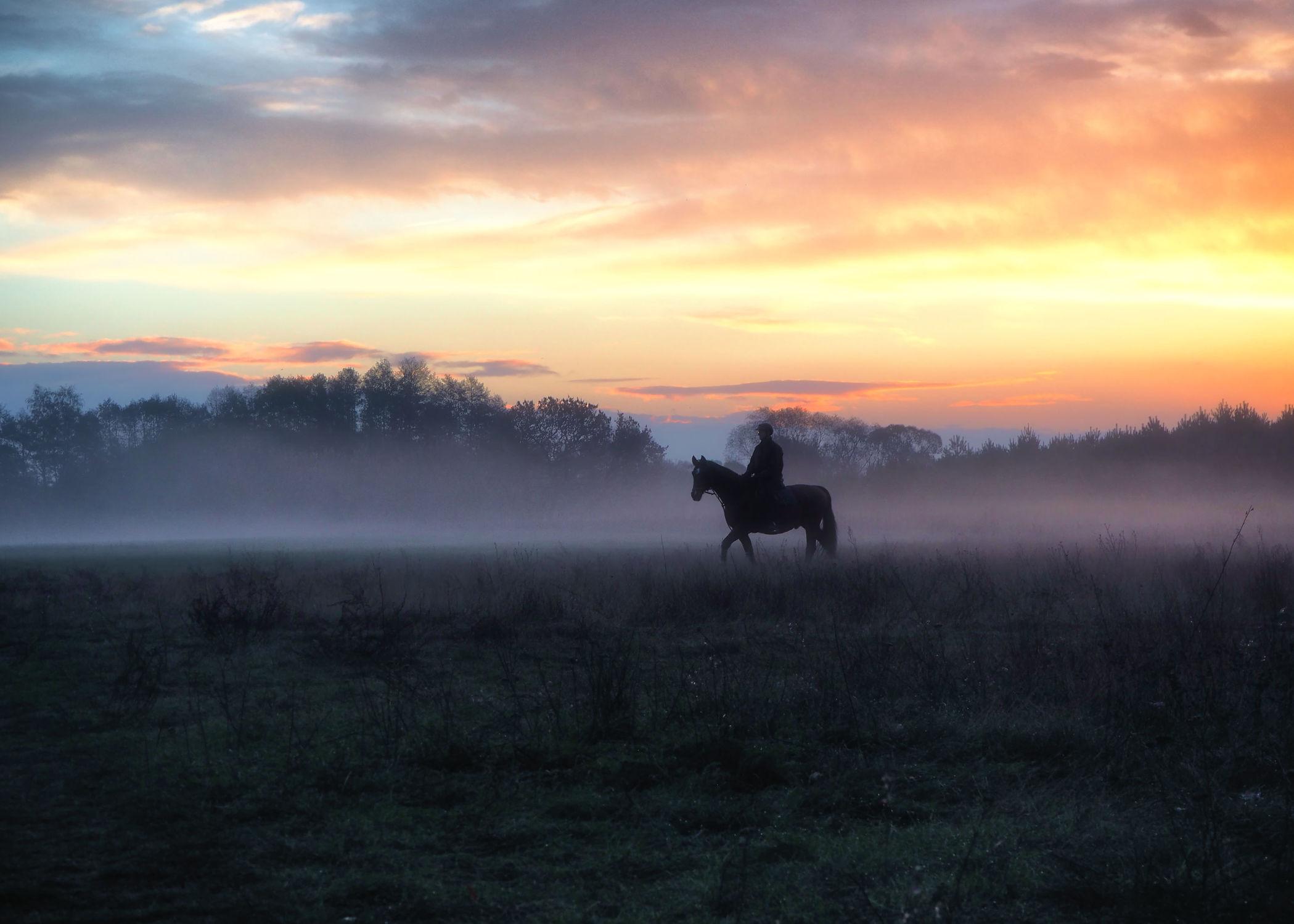 Bild mit Tiere, Weiden und Wiesen, Sonnenuntergang, Sonnenuntergang, Nebel, Pferde, Pferde, Tier, Wiese, Kinderbild, Kinderbilder, Feld, Pferd, Pferd, Felder, Weide, reiten, Reiter, Reiterin, Pferdeliebe, pferdebilder, pferdebild