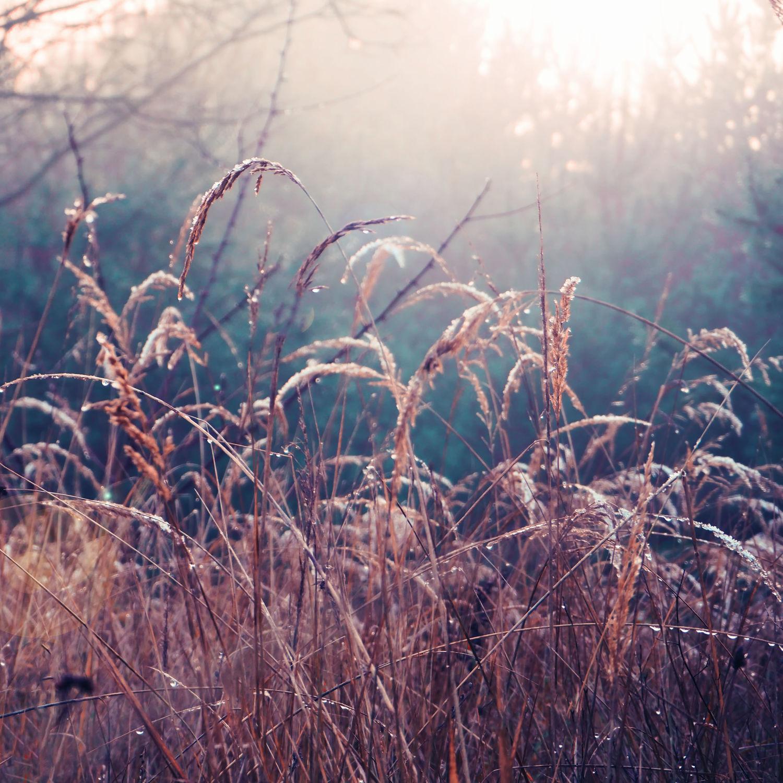 Bild mit Natur, Gräser, Gras, Wiese, Feld, Felder, Wiesen, Weide, Weiden