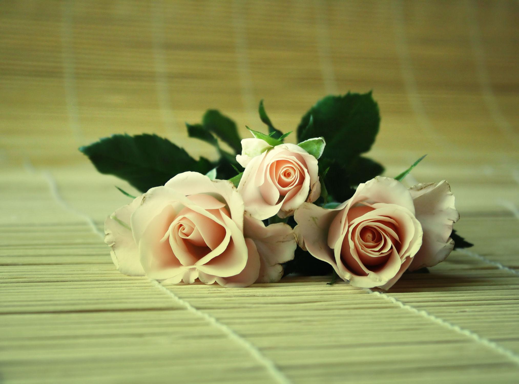 Bild mit Blumen, Rosen, Blume, Rose, Rosenblüte, Blumenstrauß, Rosenstrauß, Rosenblätter, Hochzeit, rosenblüten, Hochzeitsbilder