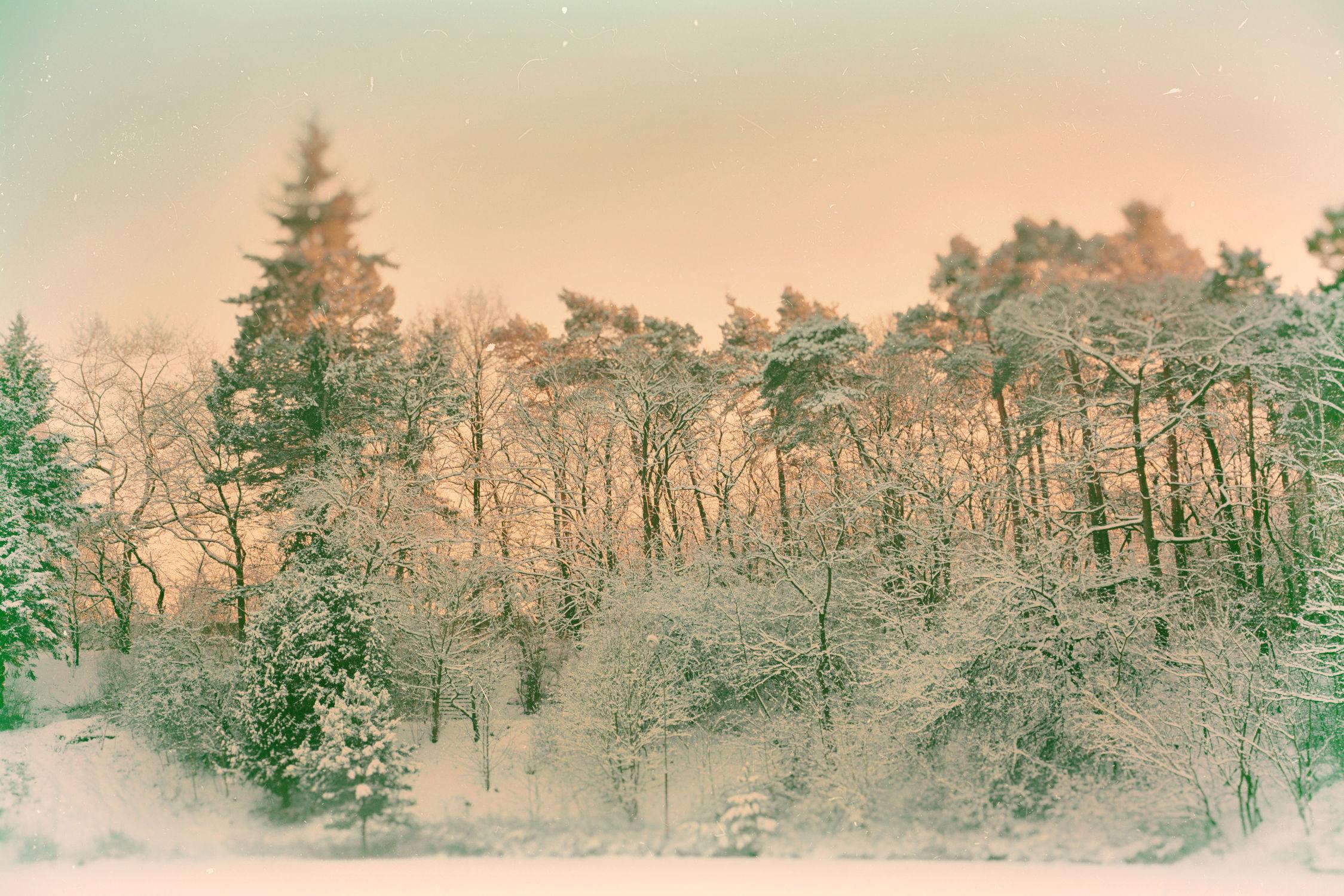 Bild mit Bäume, Winter, Schnee, Wald, Weihnachten, winterlandschaft, Winterlandschaften, Winterzeit