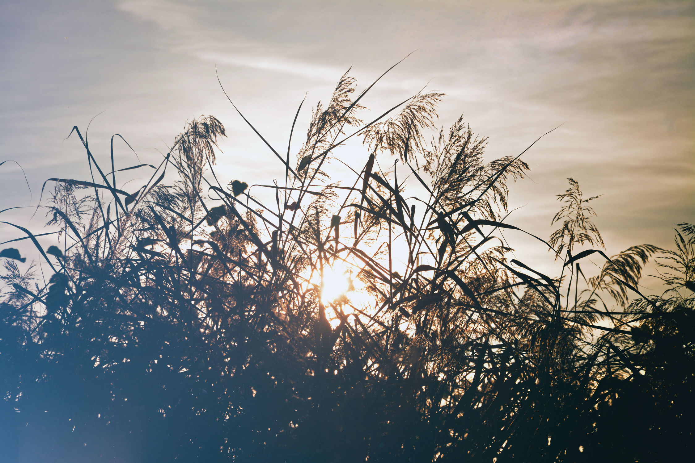 Bild mit Natur, Gräser, Landschaften, Sonne, Landschaft, Gras, Wiese, Feld, Felder, Wiesen