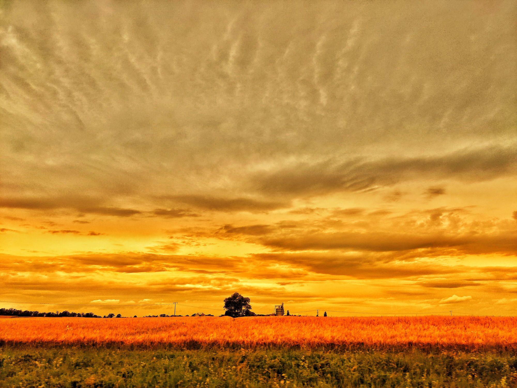 Bild mit Orange, Gelb, Wasser, Himmel, Weiden und Wiesen, Feuer, Baum, Landschaft, Wiese, Wiese, Feld, landscape, Erde, Luft, weizenfeld