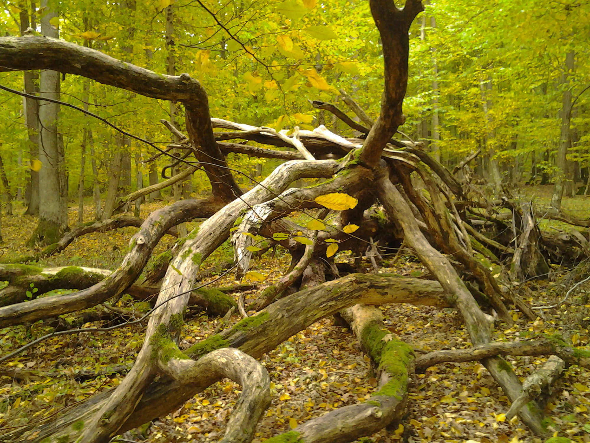 Bild mit Gelb, Grün, Landschaften, Bäume, Wald, Blätter, Landschaft, Trees, Äste, Fotografie, Küche, Leinwand, Esszimmer, Stimmung, wohnzimmer, stämme