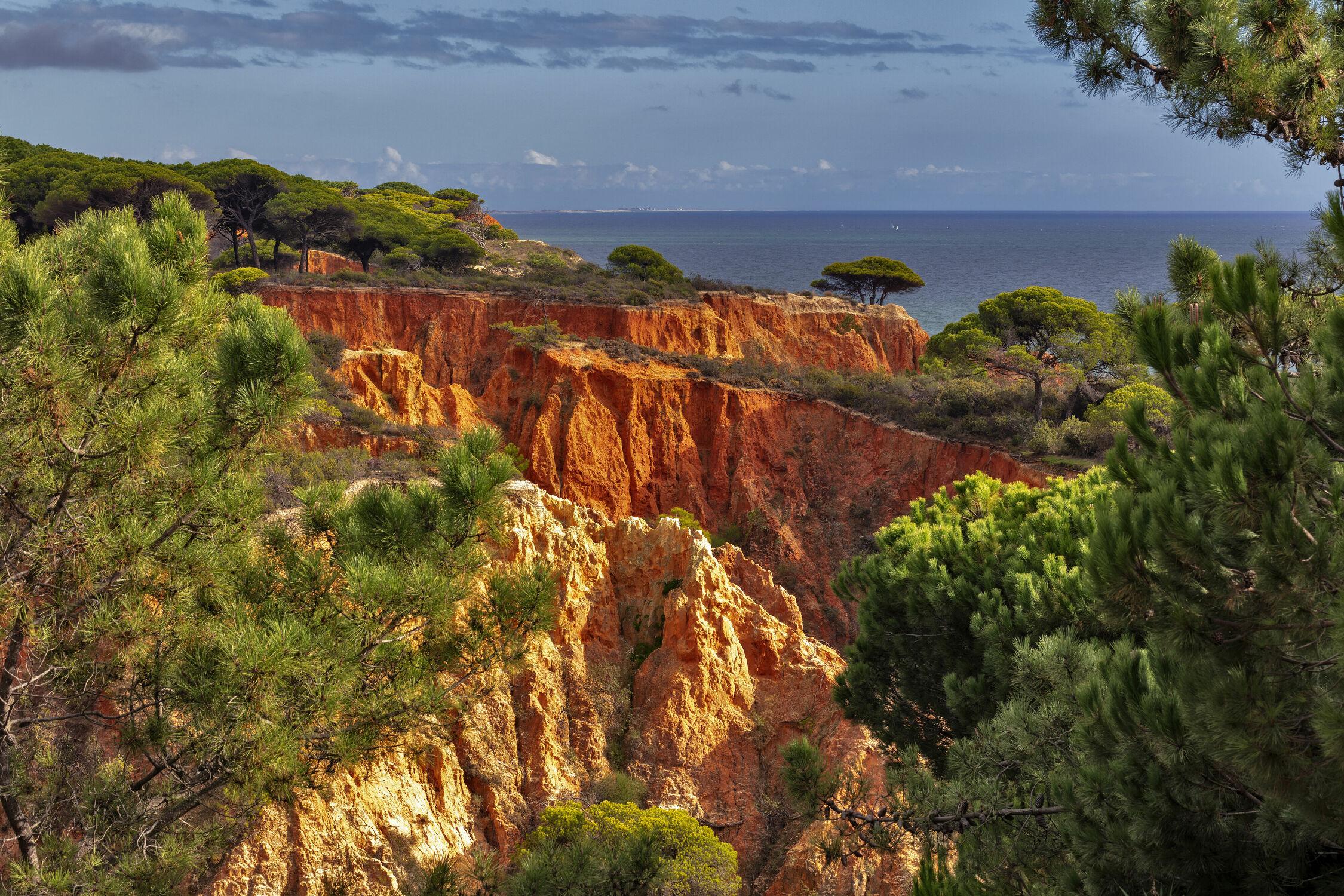 Bild mit Bäume, Felsen, Mittelmeer, Felsenküste, Portugal, Pinienbäume, Rotsandstein, Algarve, Falesia, Albufeira