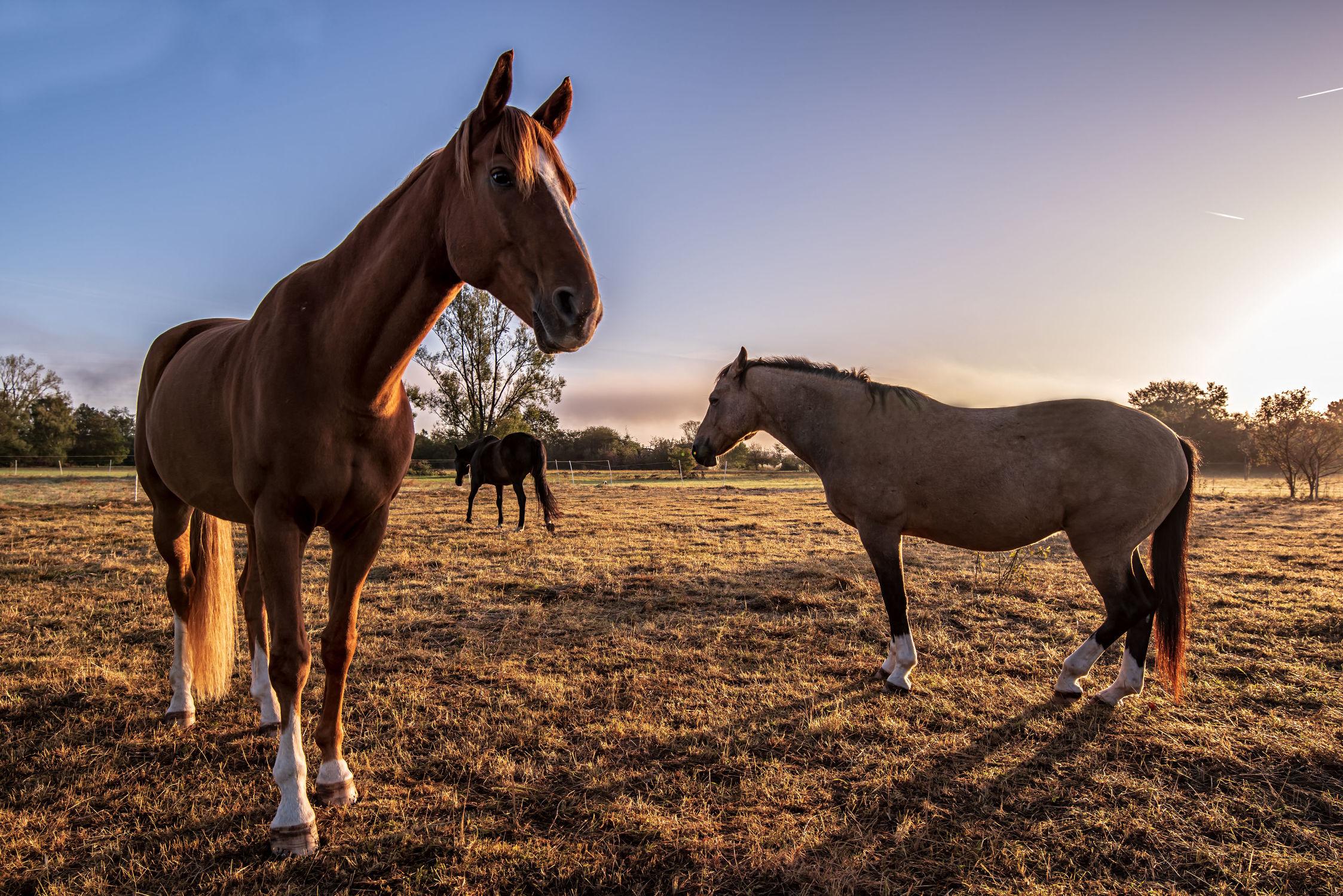 Bild mit Tiere, Natur, Bäume, Sonnenaufgang, Pferde, Landschaft, Wiese, Gegenlicht, Licht, Kinderbild, Kinderbilder, Stille, Wiesen, Weide, Morgenstimmung, reiten, Schatten, Einsamkeit, Koppel, Pferdeliebe, pferdebilder, pferdebild