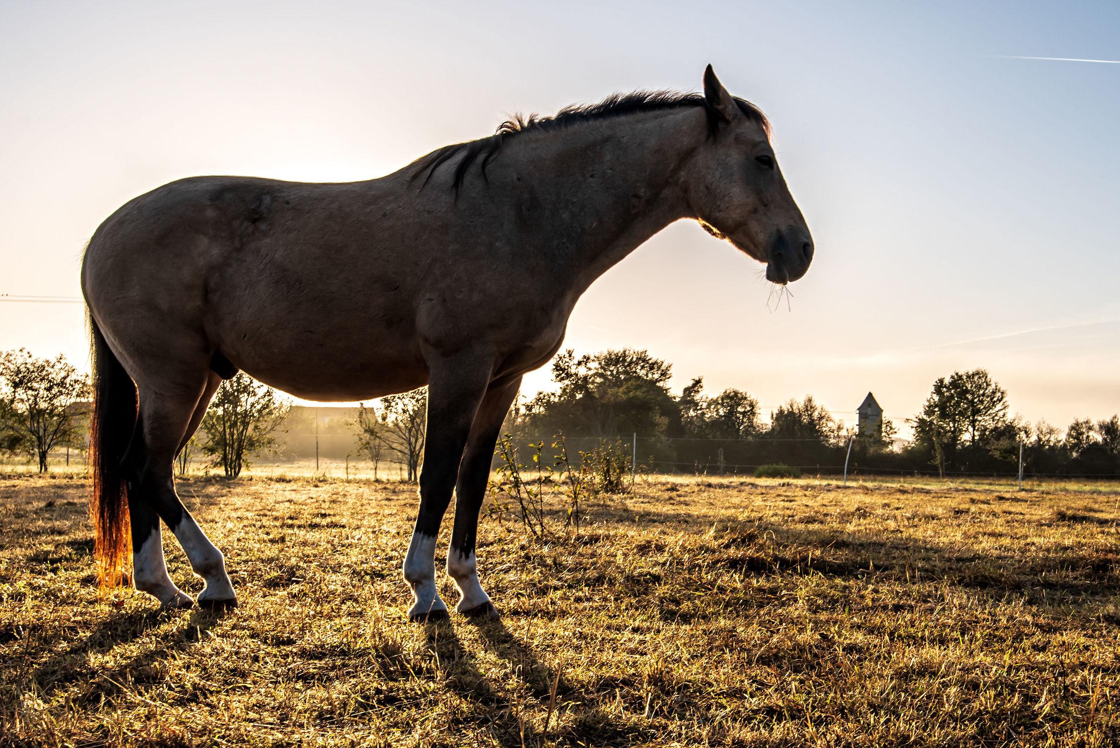 Bild mit Tiere, Natur, Bäume, Sonnenaufgang, Pferde, Landschaft, Wiese, Gegenlicht, Licht, Kinderbild, Kinderbilder, Stille, Wiesen, Weide, reiten, Schatten, Einsamkeit, Koppel, Morgens, Pferdeliebe, pferdebilder, pferdebild