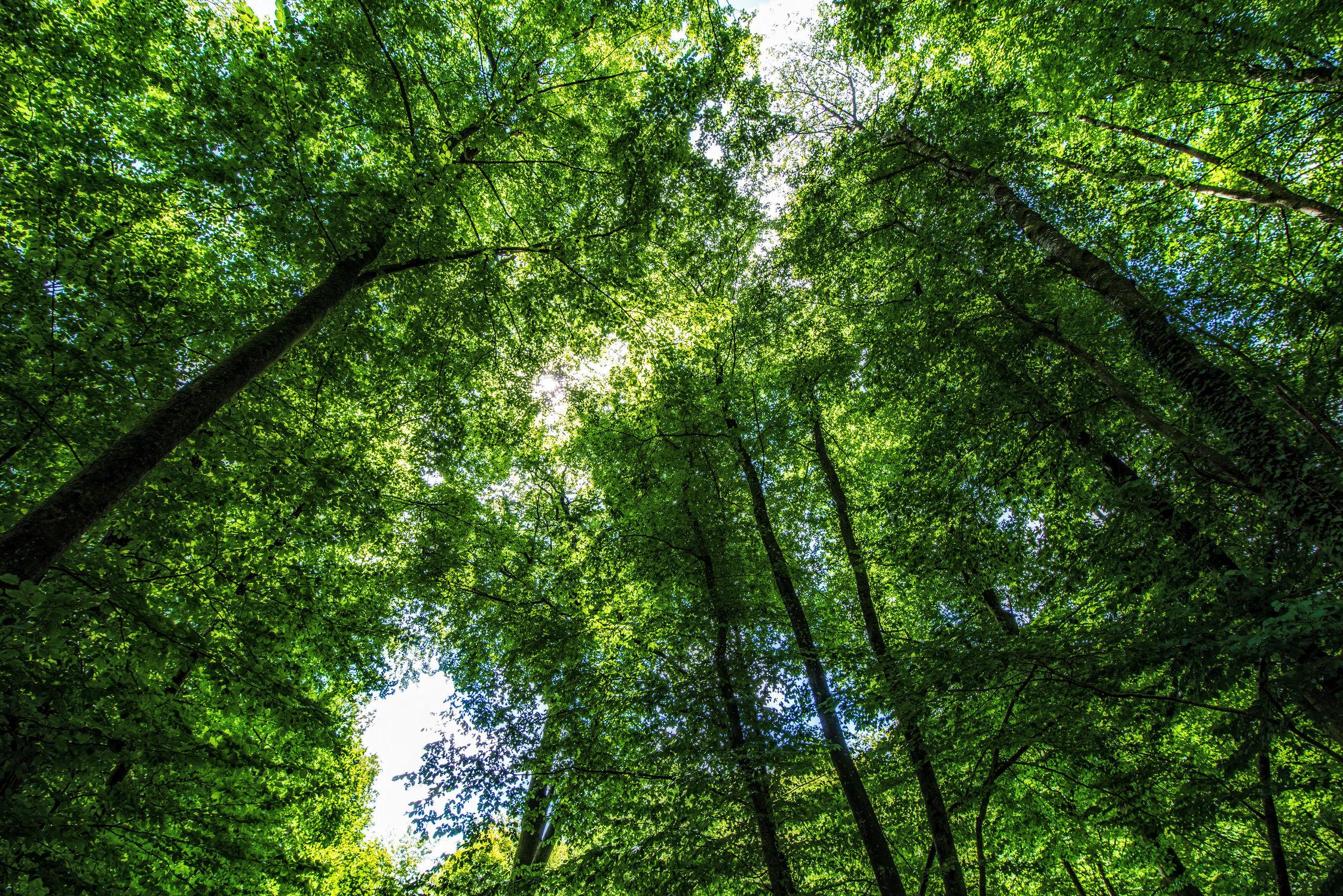 Bild mit Natur, Himmel, Bäume, Jahreszeiten, Deutschland, Sommer, Sonnenaufgang, Wald, Blätter, Zweige, Aufsicht, Licht Schatten, Eifel