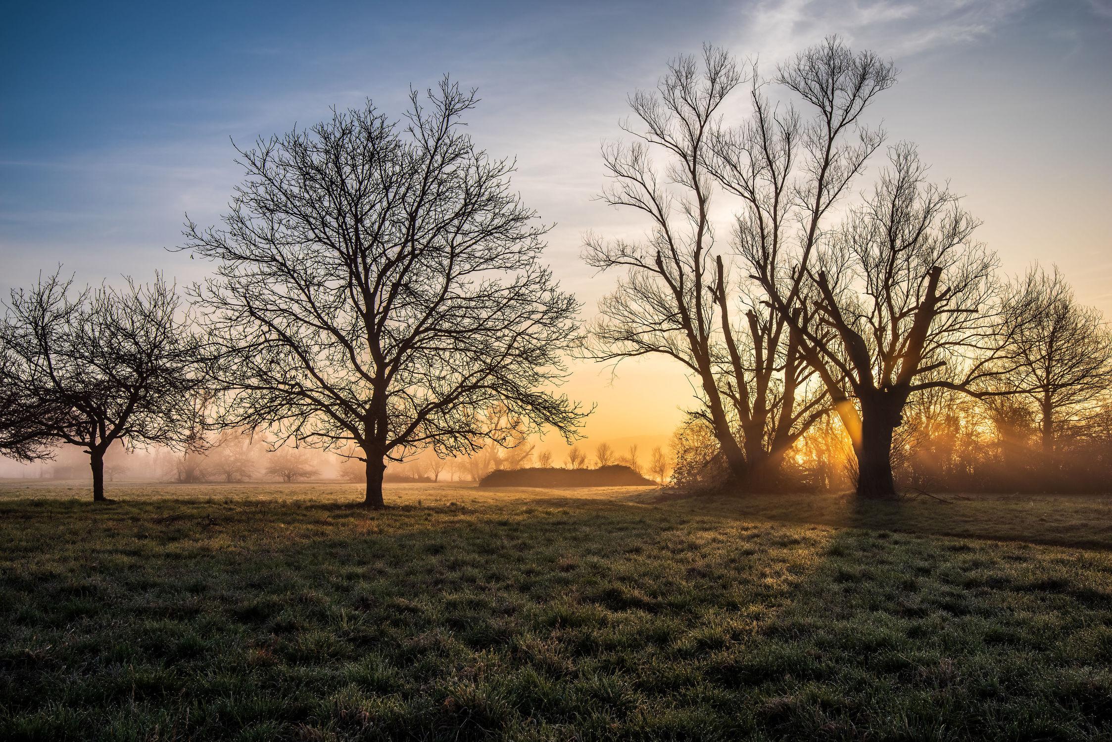 Bild mit Natur, Landschaften, Jahreszeiten, Sommer, Sonnenaufgang, Wiese, Wiesengras, Sonnenstrahlen, Nebelauflösung, Dunst, Frühmorgens