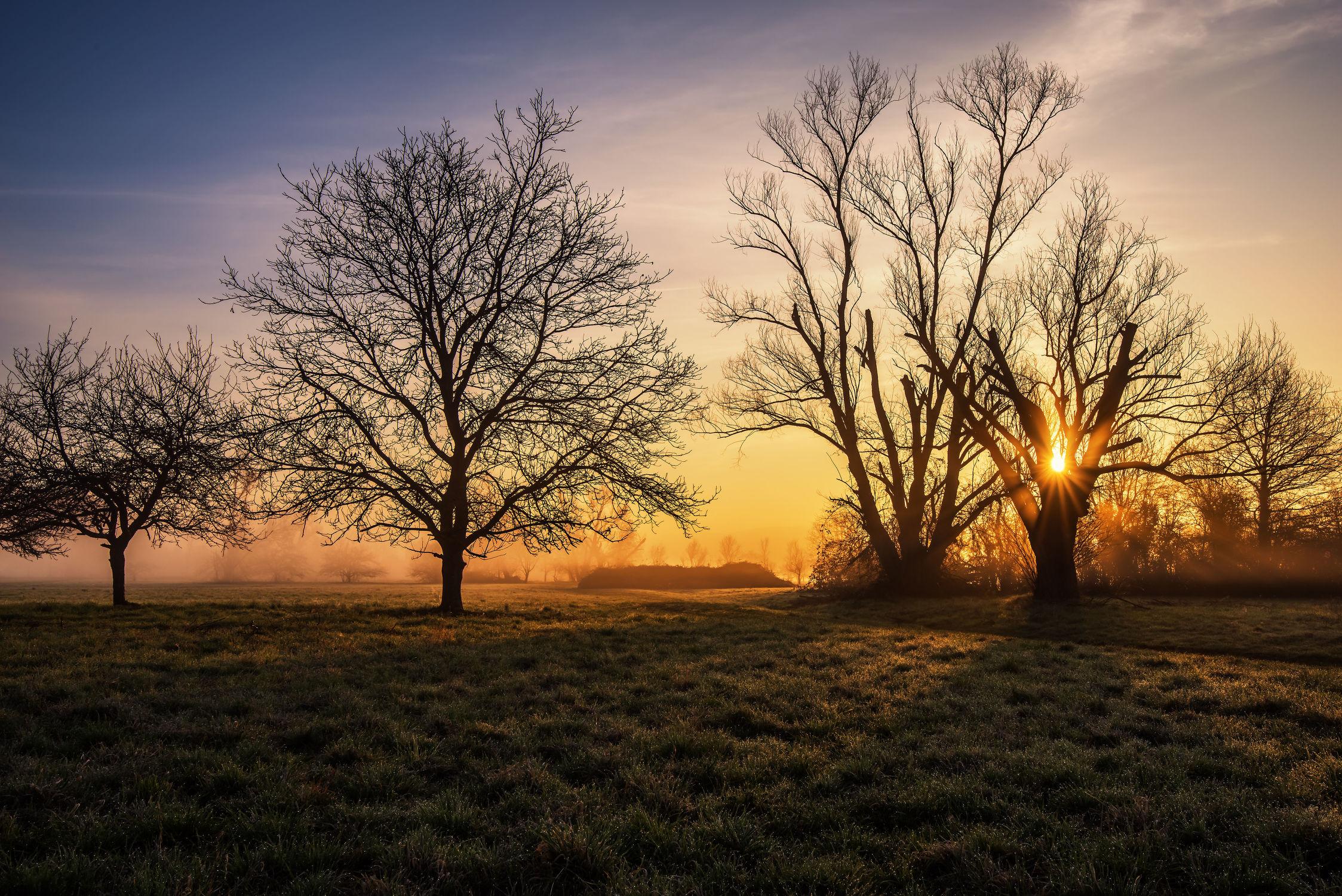 Bild mit Bäume, Jahreszeiten, Sonnenaufgang, Nebel, Sonne, Licht, Ruhe, Felder, Erholung, Wiesen, Entspannen, Schatten, Dunst, Tagesanbruch, Frühjar