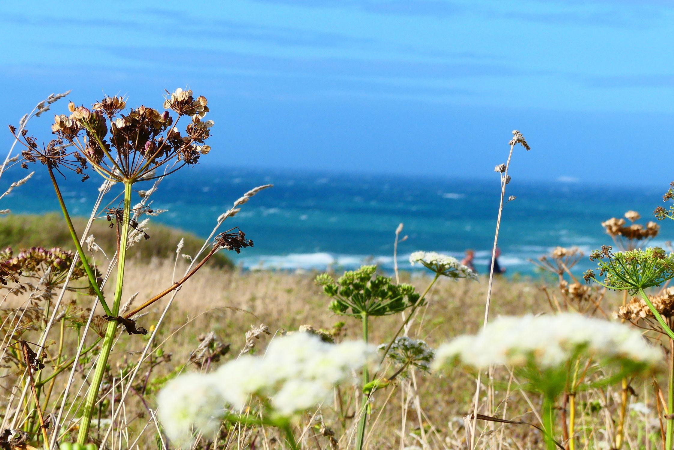 Bild mit Pflanzen, Gräser, Meer, Blauer Himmel, Küste