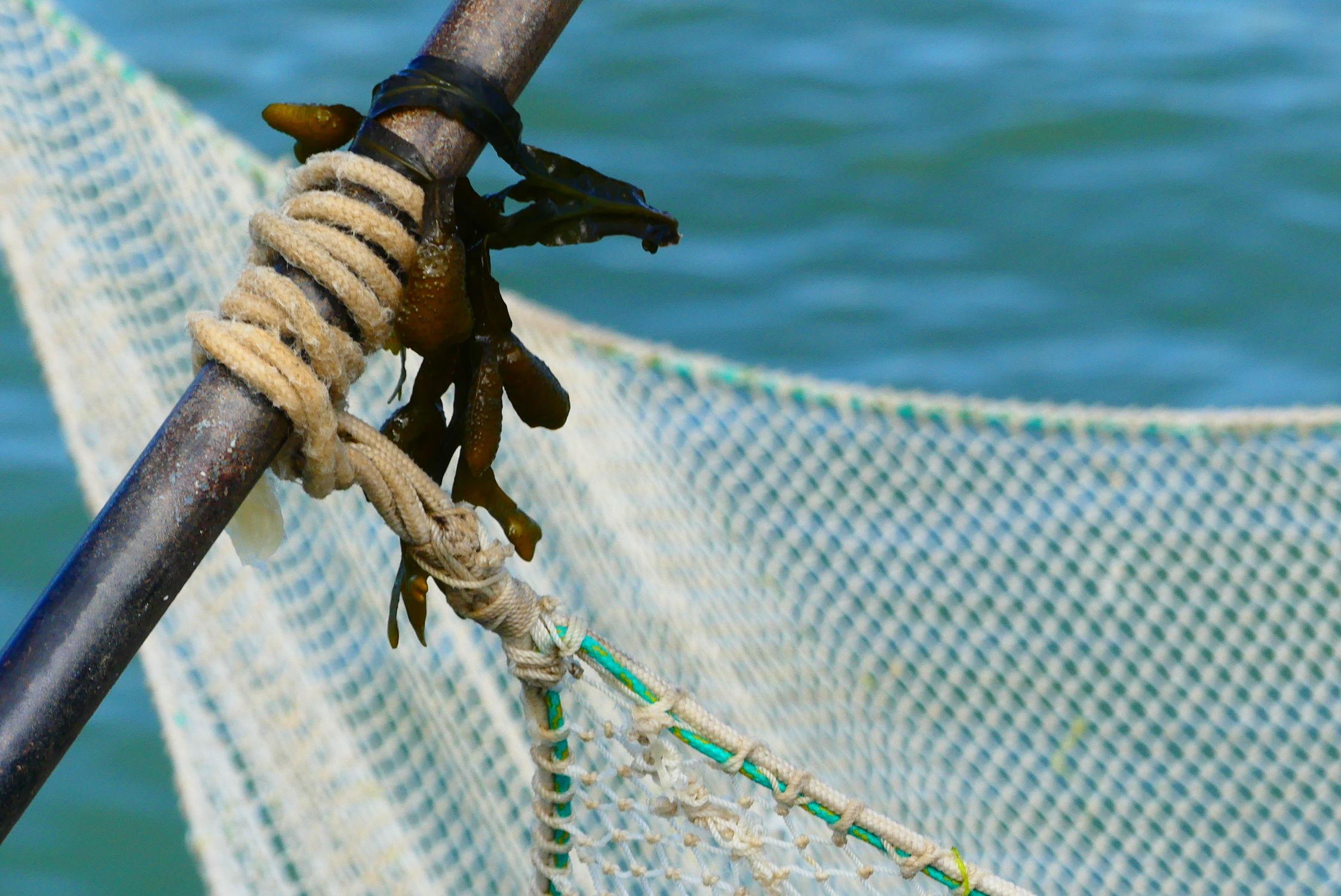 Bild mit Wasser, Meer, Algen, Netz, Fangnetze, angel