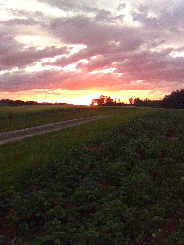 Bild mit Wolken, Sonnenaufgang, Landschaft, Feld, Felder & Wiesen, Wiesen, Feldweg