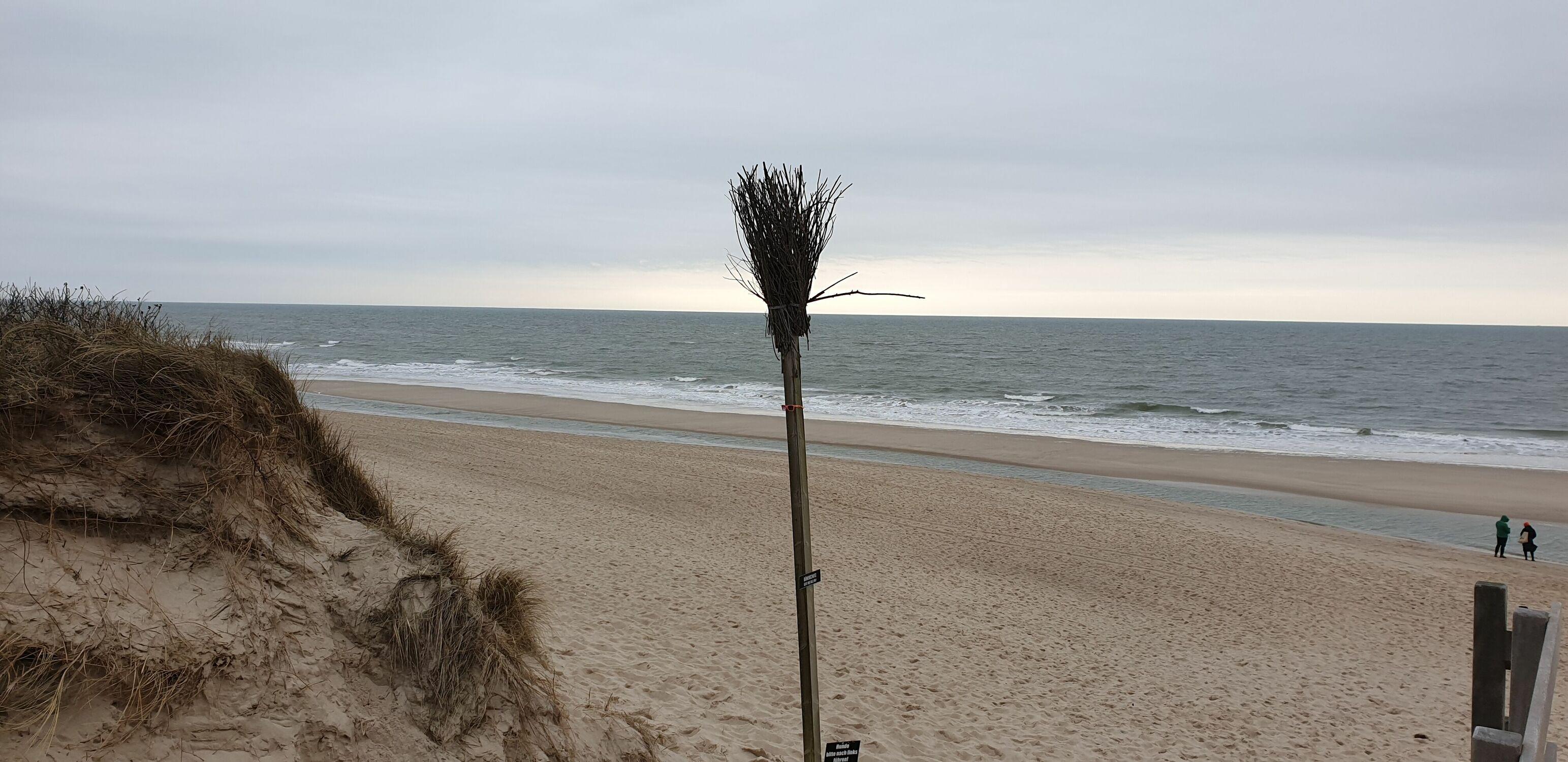 Bild mit Sonne, Nordsee, Dünen Schilf, Strand & Meer, Nordseeküste, Strand und Meer