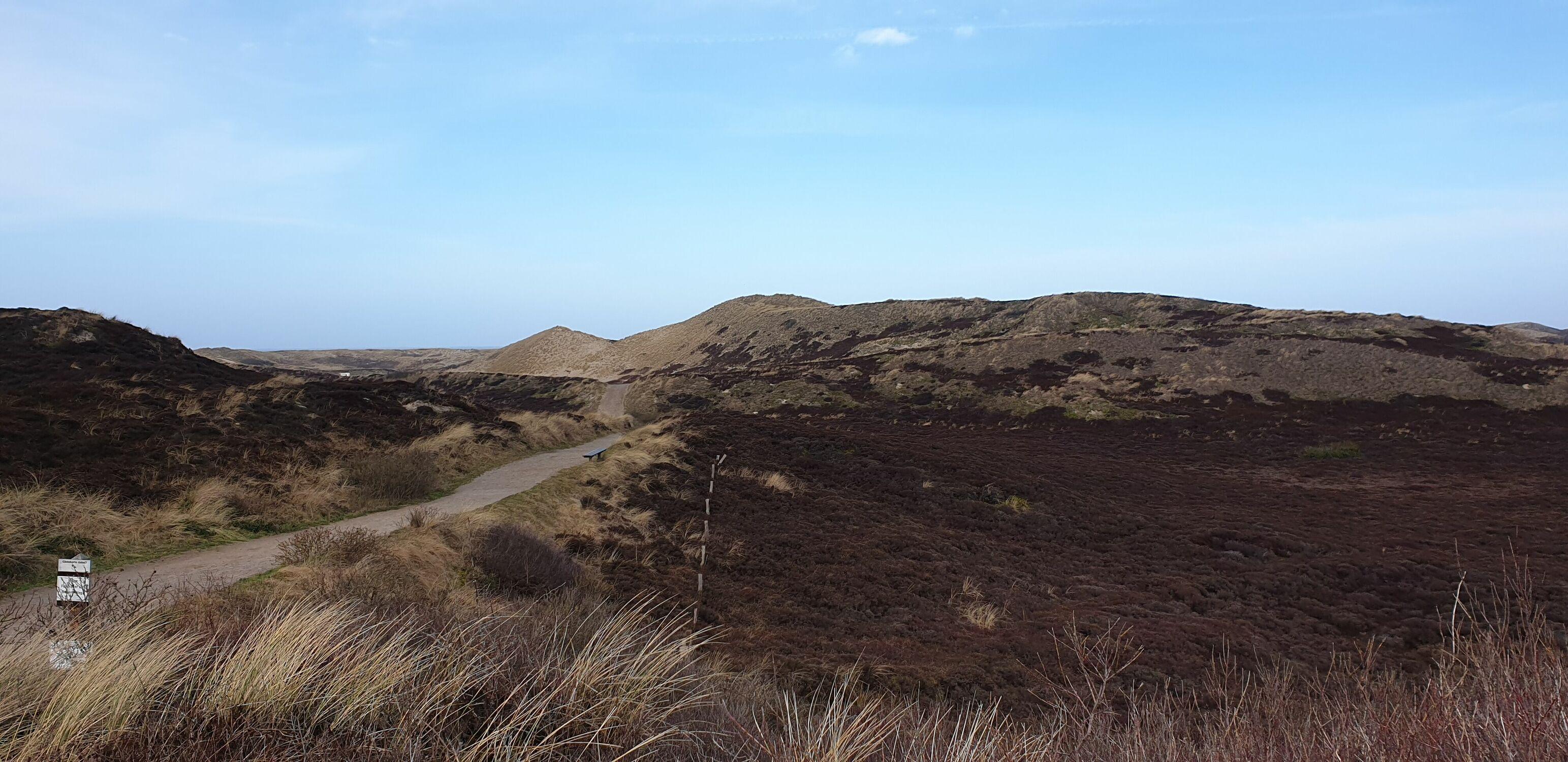 Bild mit Dünengras, Sylt, Dünenlandschaft, Dünenschilf, Dünen panorama, Dünenblick, Sanddünen