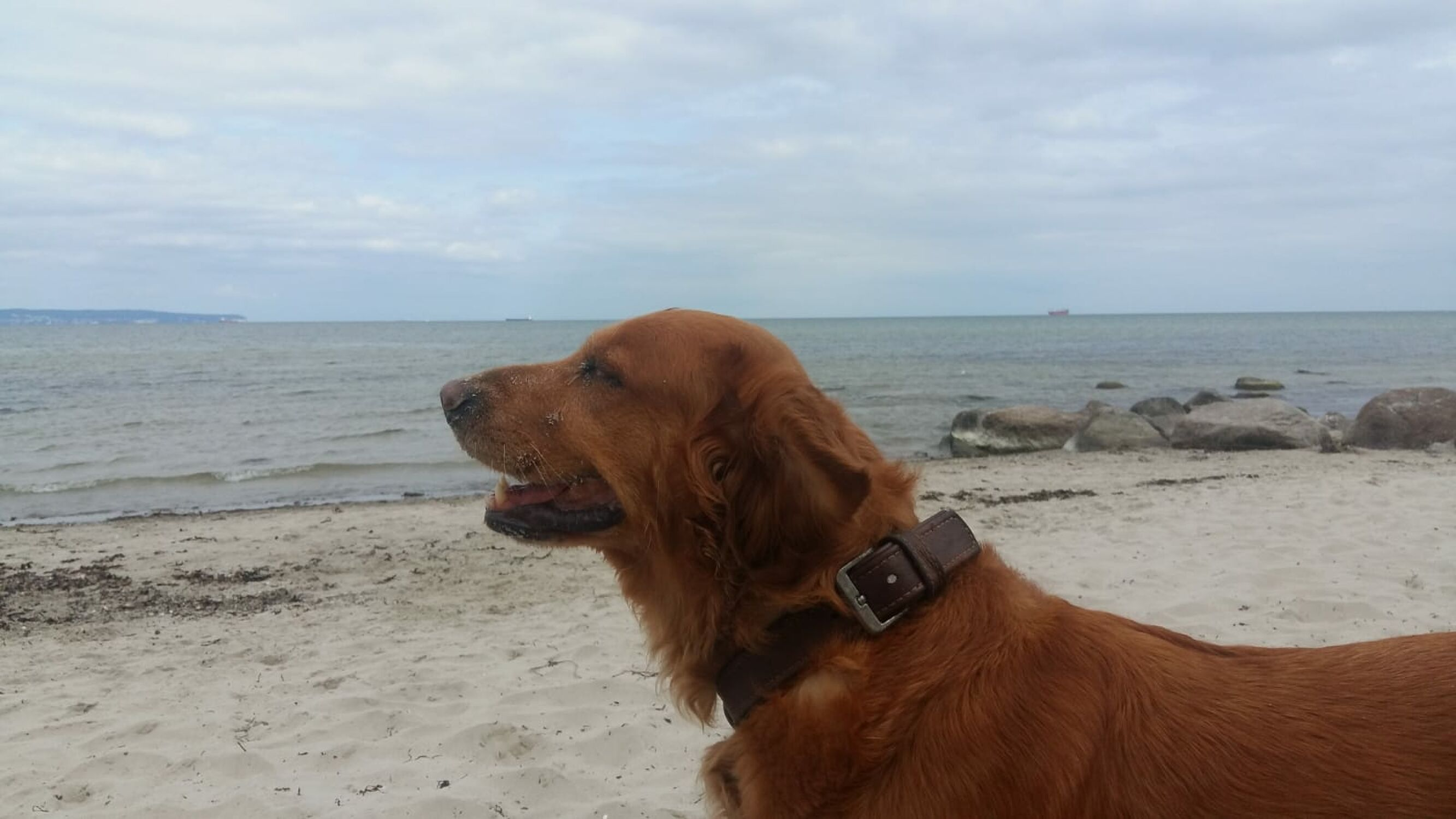 Bild mit Strand, Hund, Rassehunden, Nordsee, Küste, Hundestrand