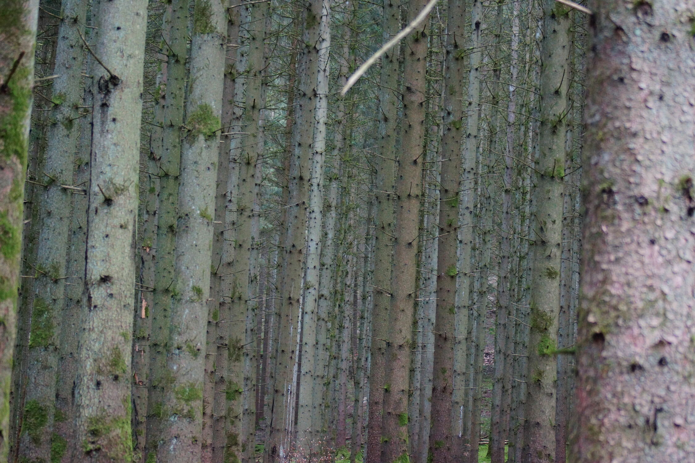 Bild mit Natur, Wald, Märchenwald, Blick in den Wald, Mischwald, Ruhe, Ruhe Erholung