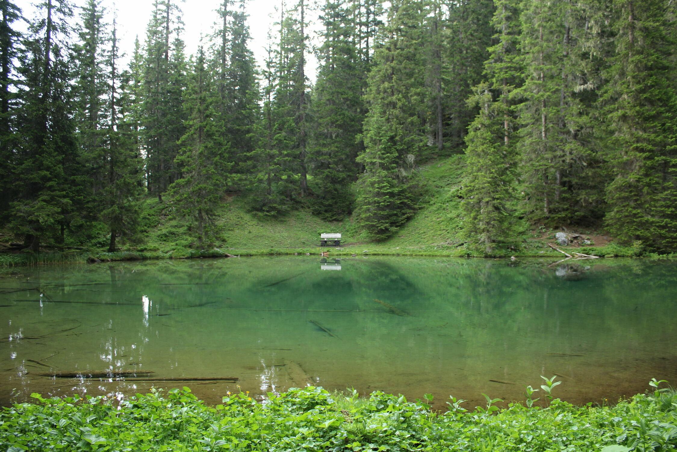 Bild mit Natur, Grün, Wald, See, Schweiz, Arosa