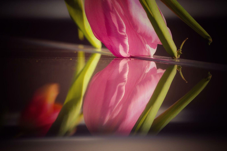 Bild mit Pflanzen, Blumen, Frühling, Makrofotografie, Tulpe, Flower, Flowers, Spiegelung, Blumenfotografie, Marko