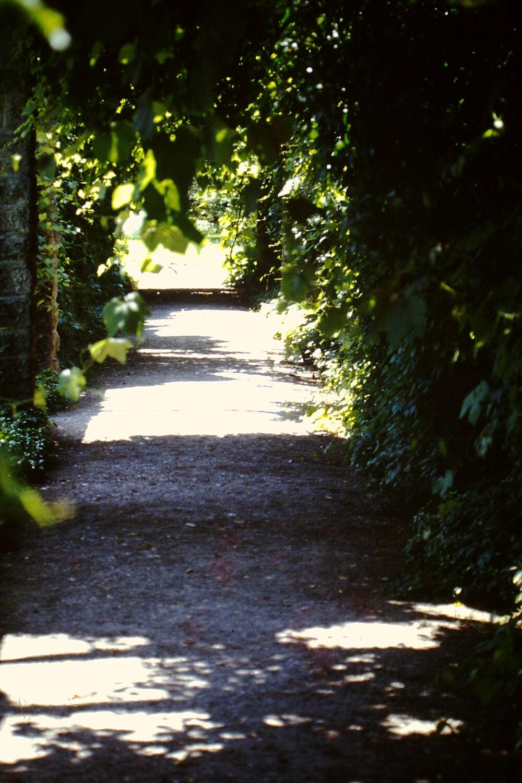 Bild mit Weg, Waldweg