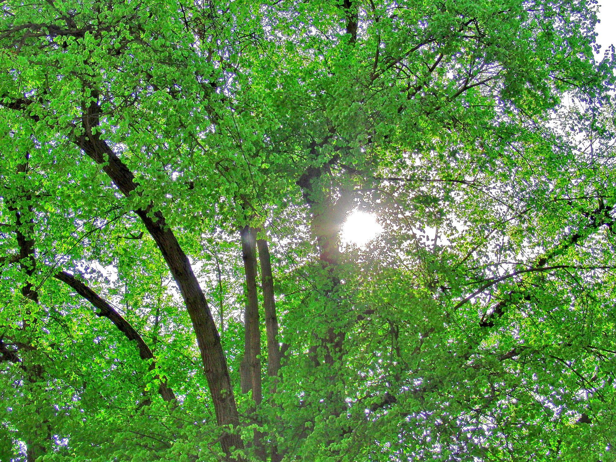 Bild mit Farben, Natur, Grün, Pflanzen, Gräser, Landschaften, Bäume, Jahreszeiten, Wälder, Frühling, Herbst, Wald, Lichtung, Baum, Baumkone