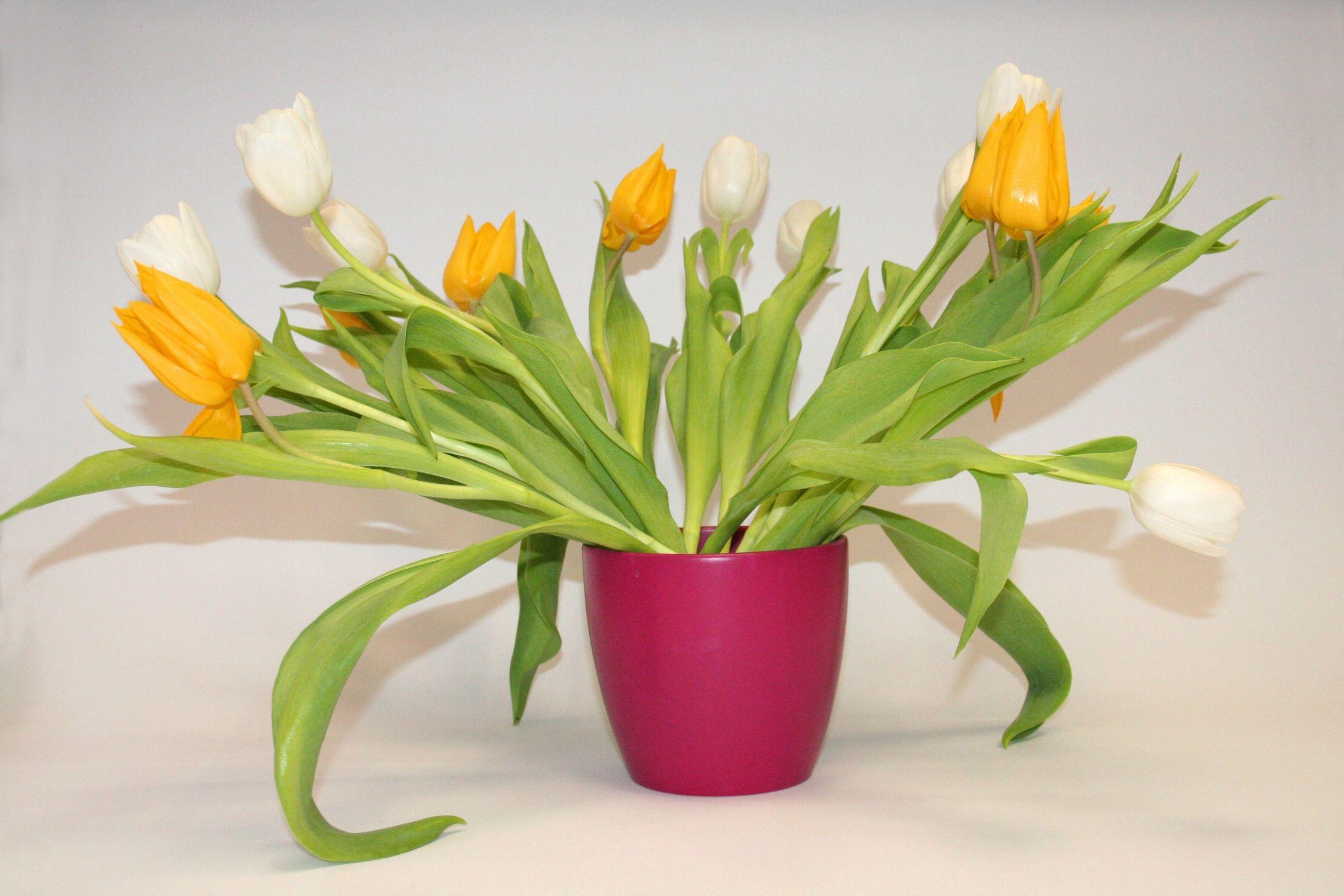 Bild mit Gegenstände, Natur, Pflanzen, Blumen, Töpfe, Sträuße, Tulpe, Tulpen, Tulpenstrauß, Blumenstrauß