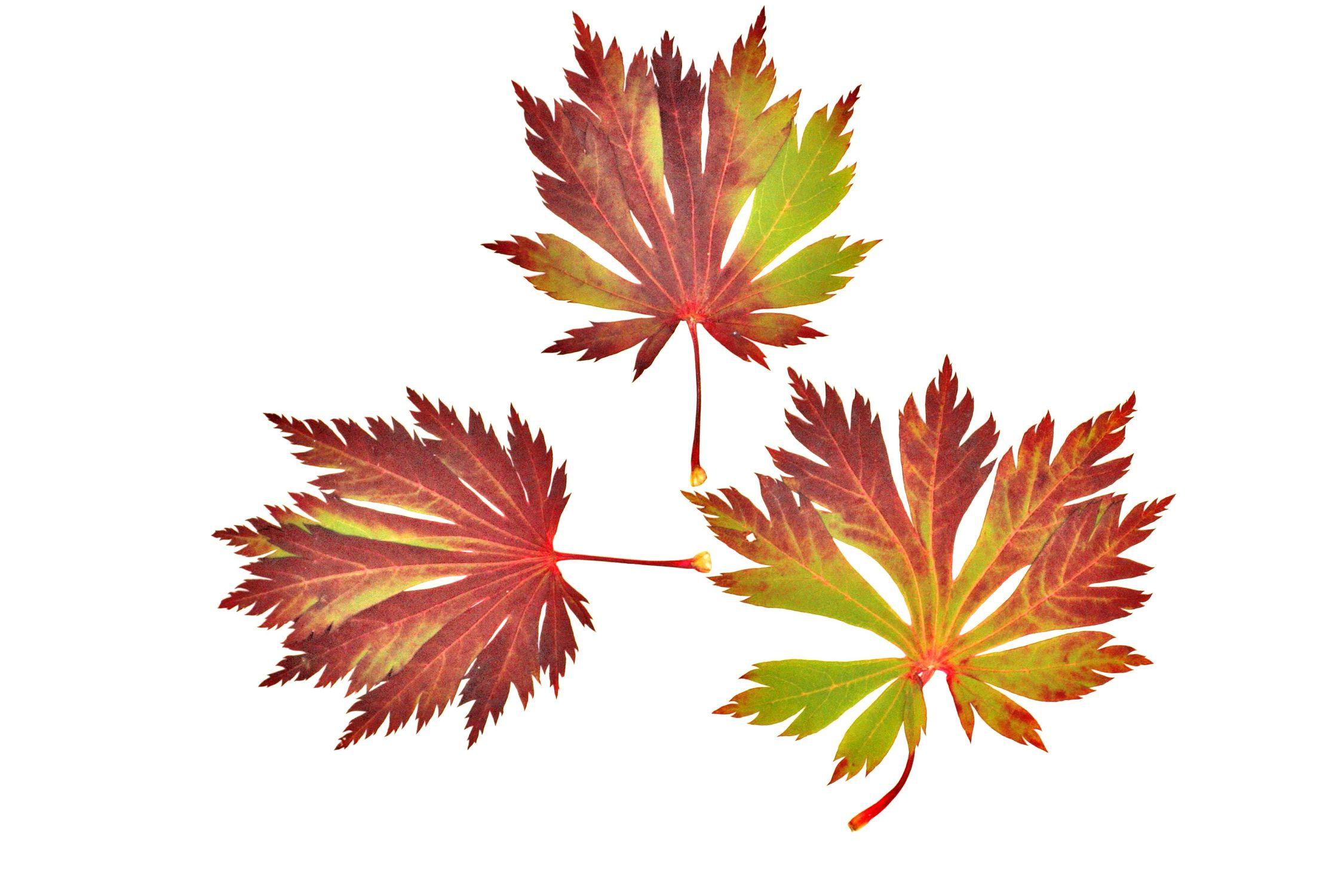 Bild mit Natur, Pflanzen, Bäume, Jahreszeiten, Blumen, Herbst