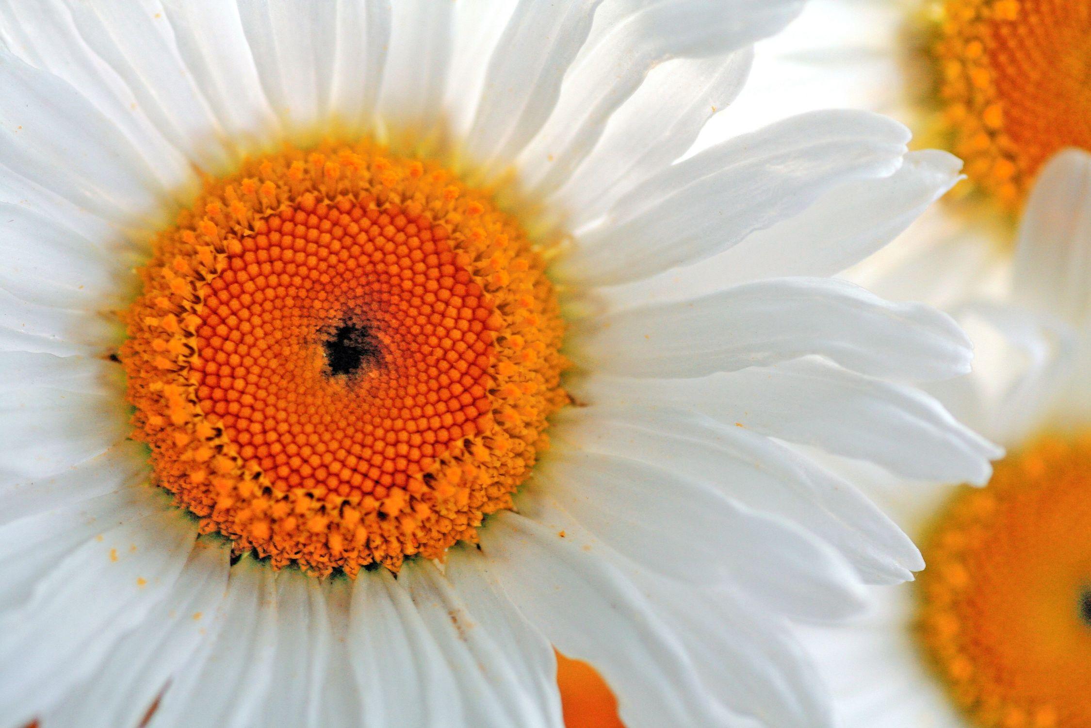 Bild mit Farben, Orange, Gelb, Natur, Pflanzen, Blumen, Korbblütler, Gerberas, Kamillen, Sonnenblumen