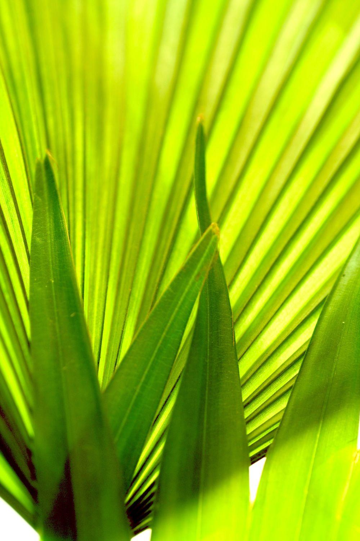 Bild mit Farben, Natur, Grün, Pflanzen, Bäume, Blumen, Palmen