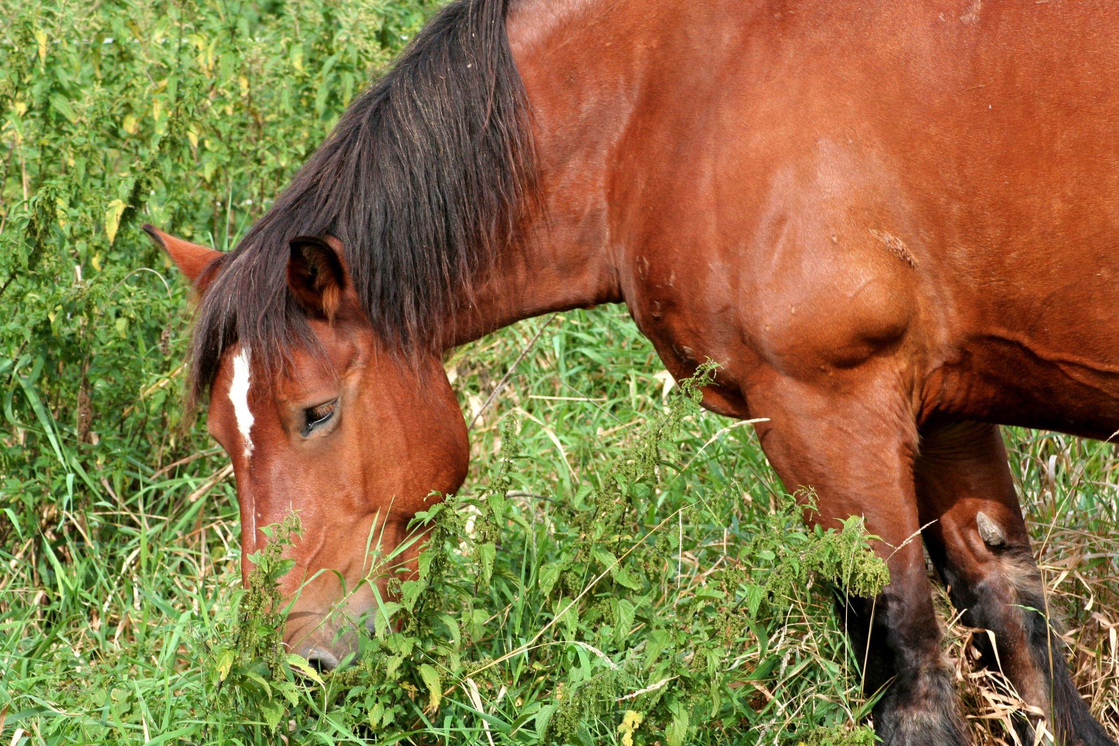Bild mit Tiere, Säugetiere, Natur, Pflanzen, Gräser, Landschaften, Weiden und Wiesen, Architektur, Bauwerke, Gebäude, Nasen, Bauernhöfe, Unpaarhufer, Pferde, Pferd
