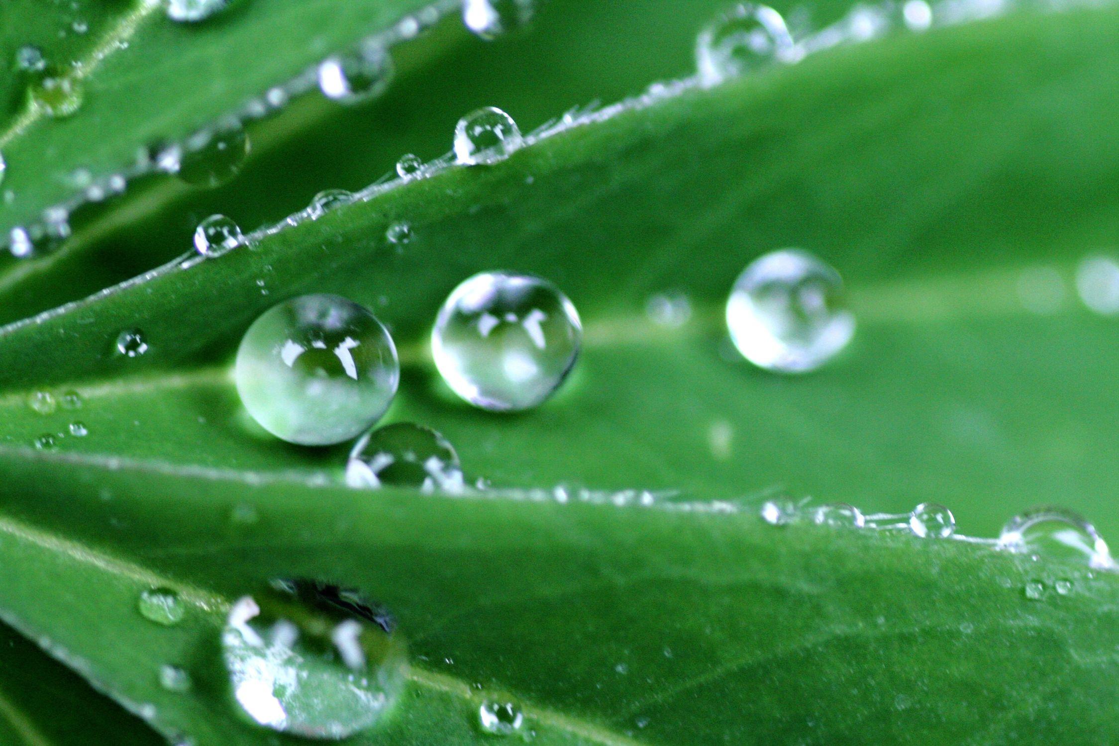 Bild mit Natur, Wasser, Pflanzen, Wassertropfen, Tropfen, Rain drops