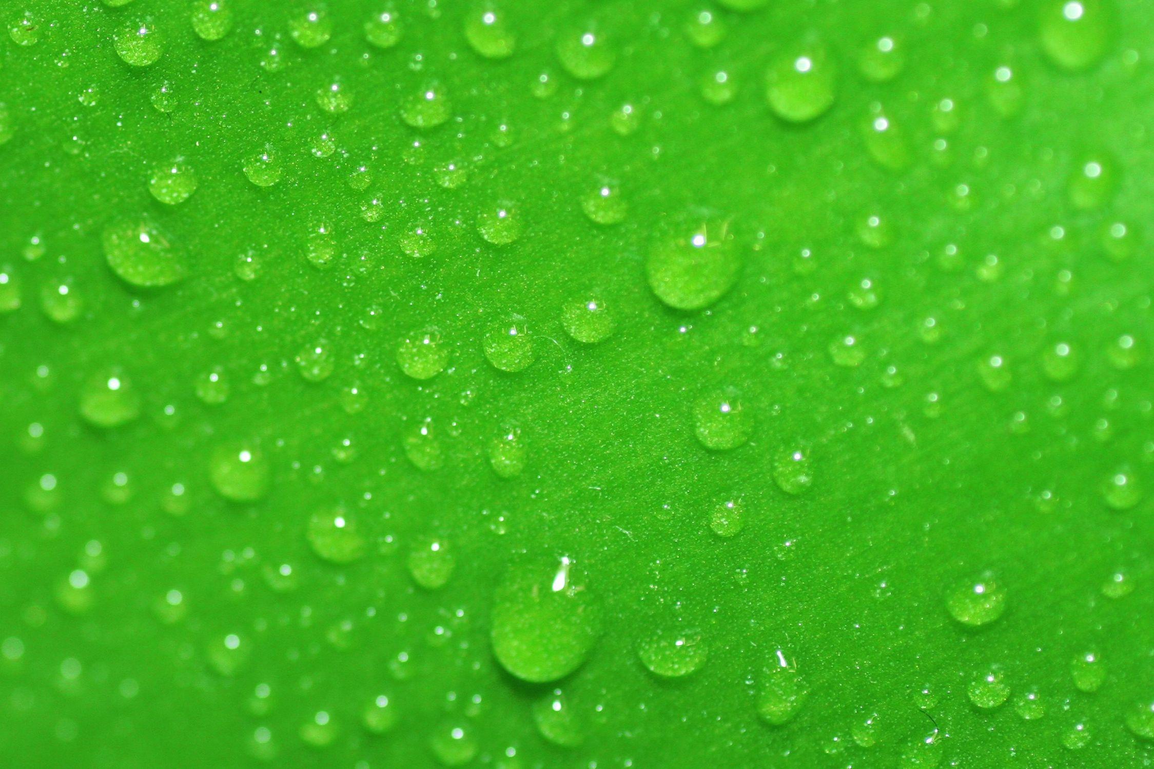 Bild mit Farben, Natur, Elemente, Wasser, Grün, Pflanzen, Gräser, Wassertropfen, Regentropfen
