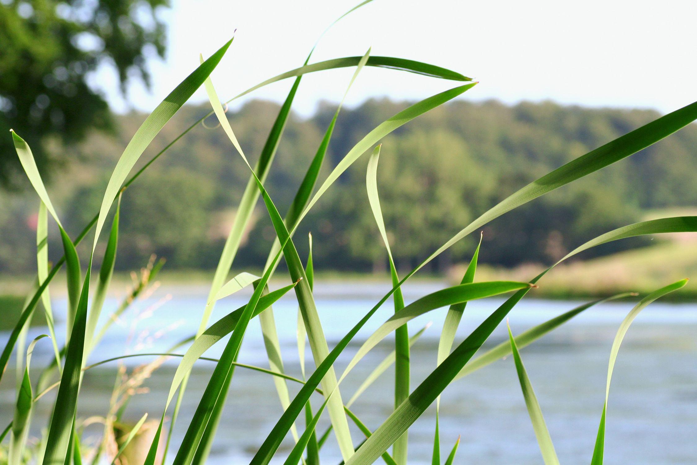Bild mit Farben, Natur, Elemente, Wasser, Grün, Pflanzen, Gräser, Blumen, Schilf